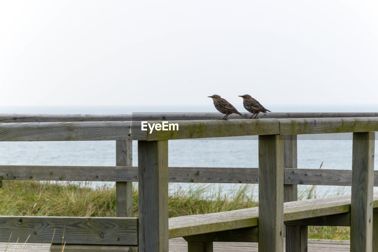 animals in the wild, bird, animal themes, animal wildlife, wood - material, sea, railing, perching, one animal, outdoors, nature, day, no people, horizon over water, water, clear sky, beach, sky, raven - bird, beauty in nature