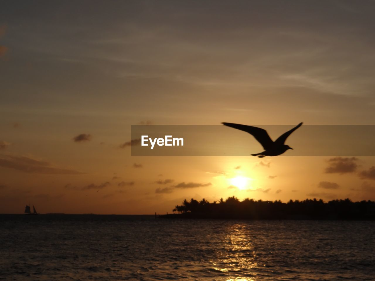 sunset, sky, water, flying, animal, animal themes, bird, beauty in nature, silhouette, vertebrate, animals in the wild, one animal, mid-air, scenics - nature, animal wildlife, cloud - sky, orange color, sea, nature, sun, no people, outdoors