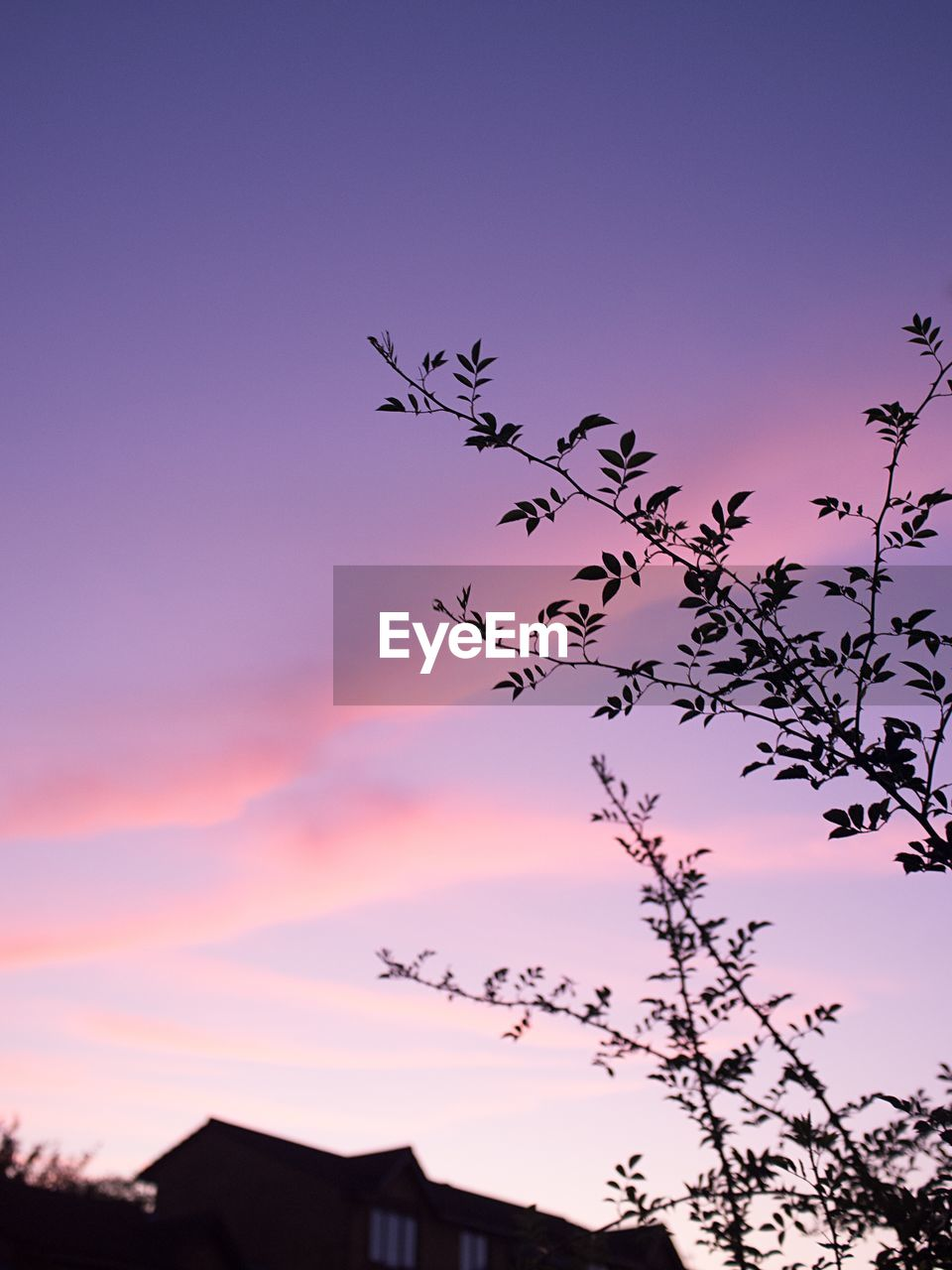 sky, sunset, low angle view, silhouette, nature, plant, no people, beauty in nature, flying, animal themes, cloud - sky, large group of animals, animal, tree, vertebrate, growth, bird, tranquility, pink color, group of animals, outdoors, flock of birds, purple