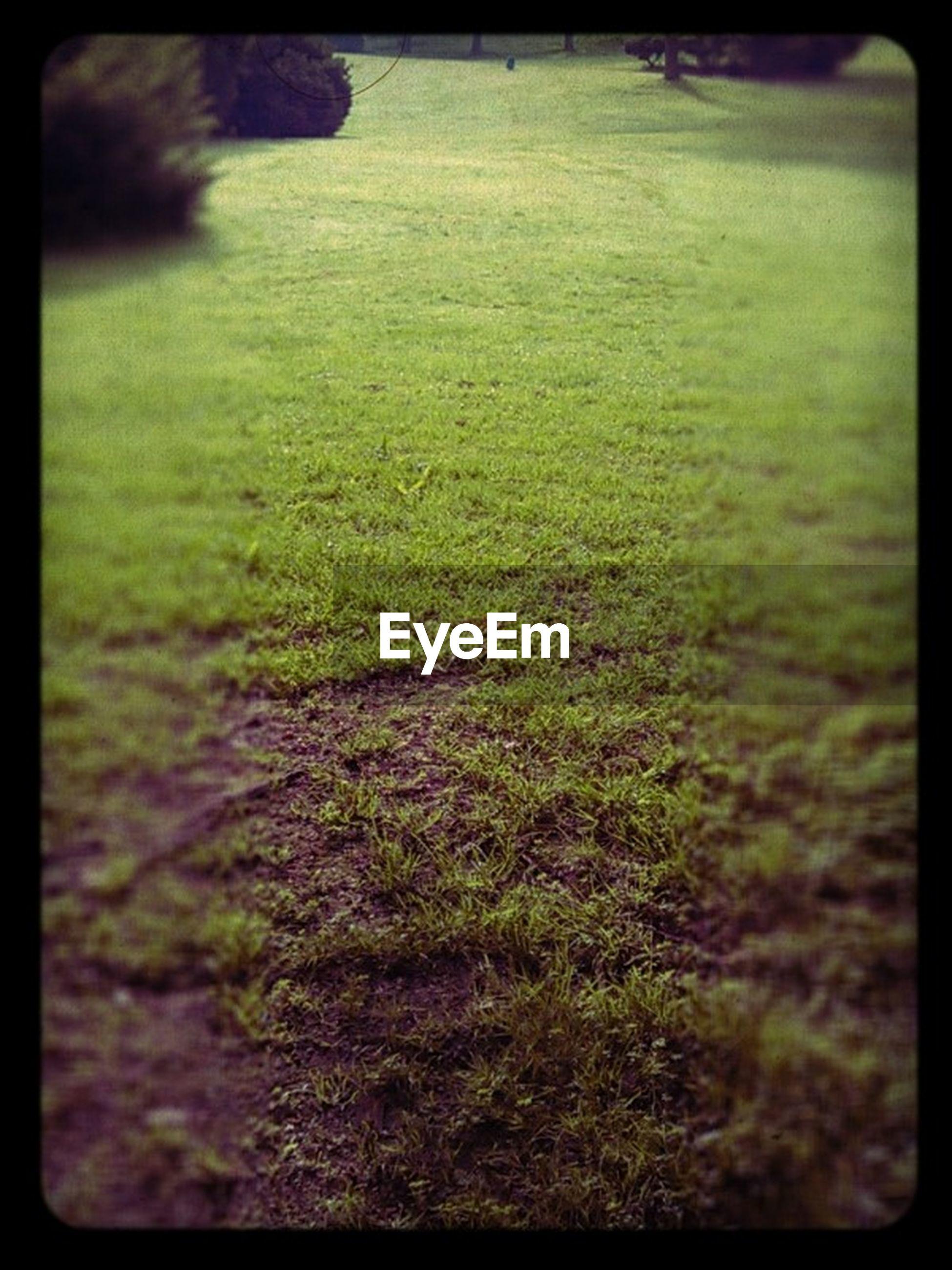 VIEW OF GRASSY FIELD