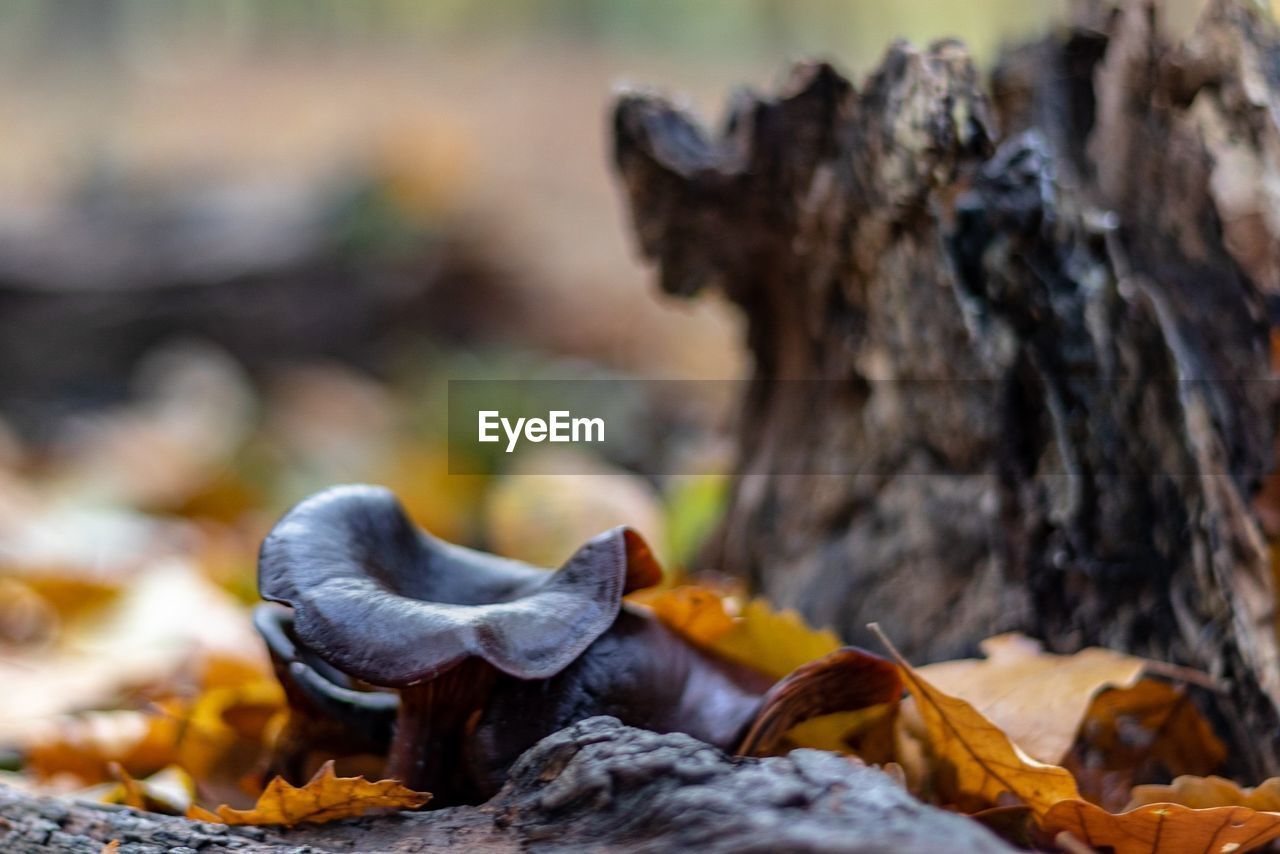 close-up, focus on foreground, no people, day, nature, plant part, leaf, autumn, dry, change, selective focus, falling, outdoors, land, fungus, tree, vulnerability, mushroom, fragility, field, leaves, dried