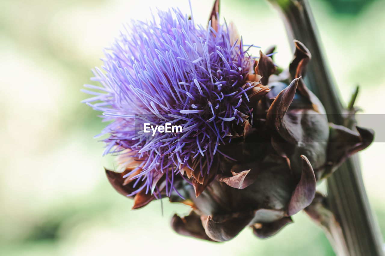 flowering plant, flower, plant, vulnerability, fragility, freshness, close-up, beauty in nature, petal, flower head, purple, inflorescence, focus on foreground, growth, nature, no people, invertebrate, day, insect, animal wildlife, outdoors, pollination