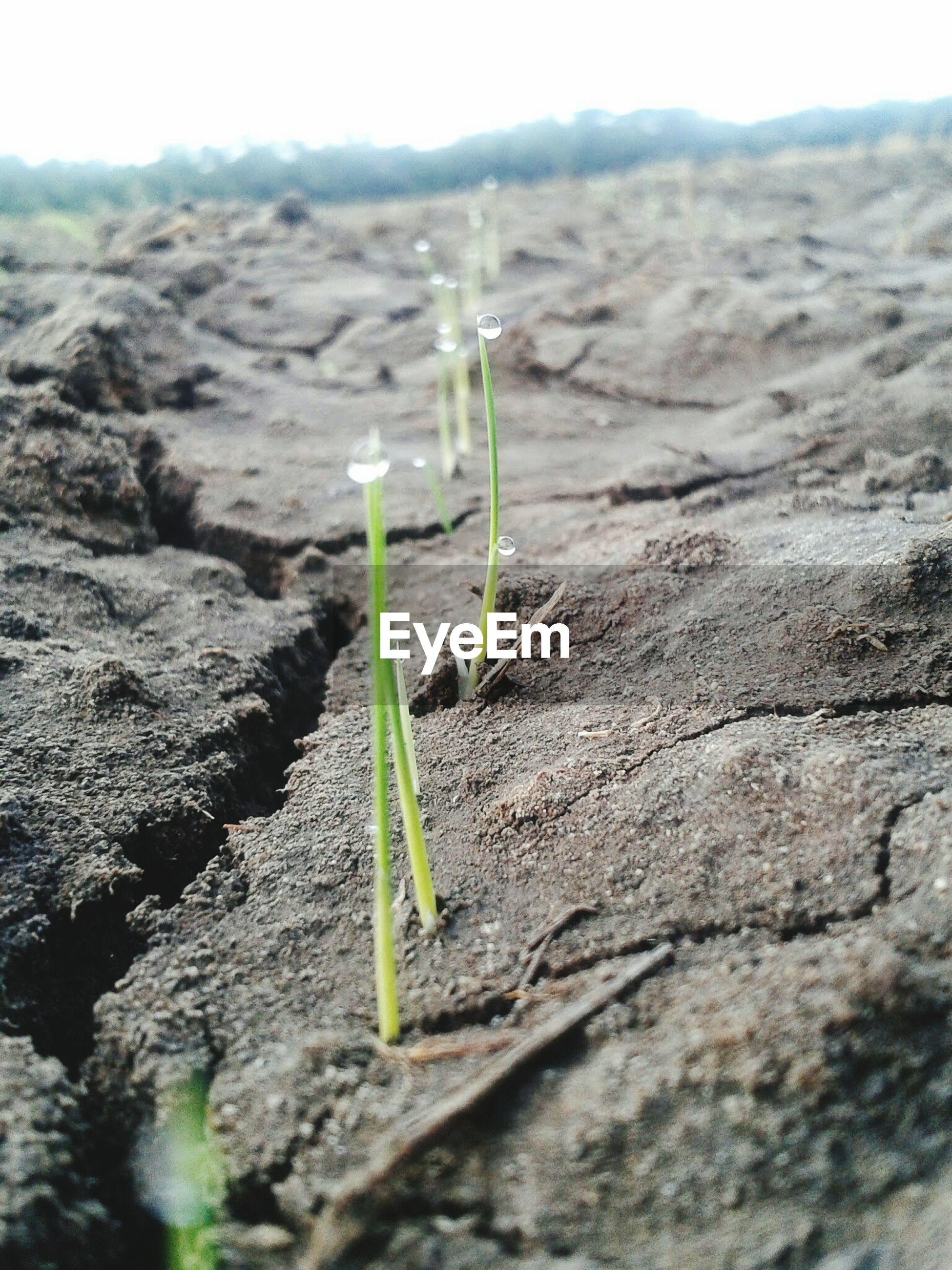CLOSE-UP OF YOUNG PLANT GROWING IN FIELD