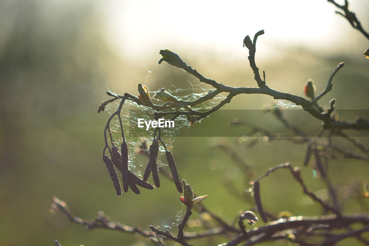 plant, close-up, focus on foreground, nature, plant part, leaf, growth, beauty in nature, no people, day, tranquility, tree, selective focus, outdoors, branch, drop, fragility, cold temperature, vulnerability, leaves, raindrop