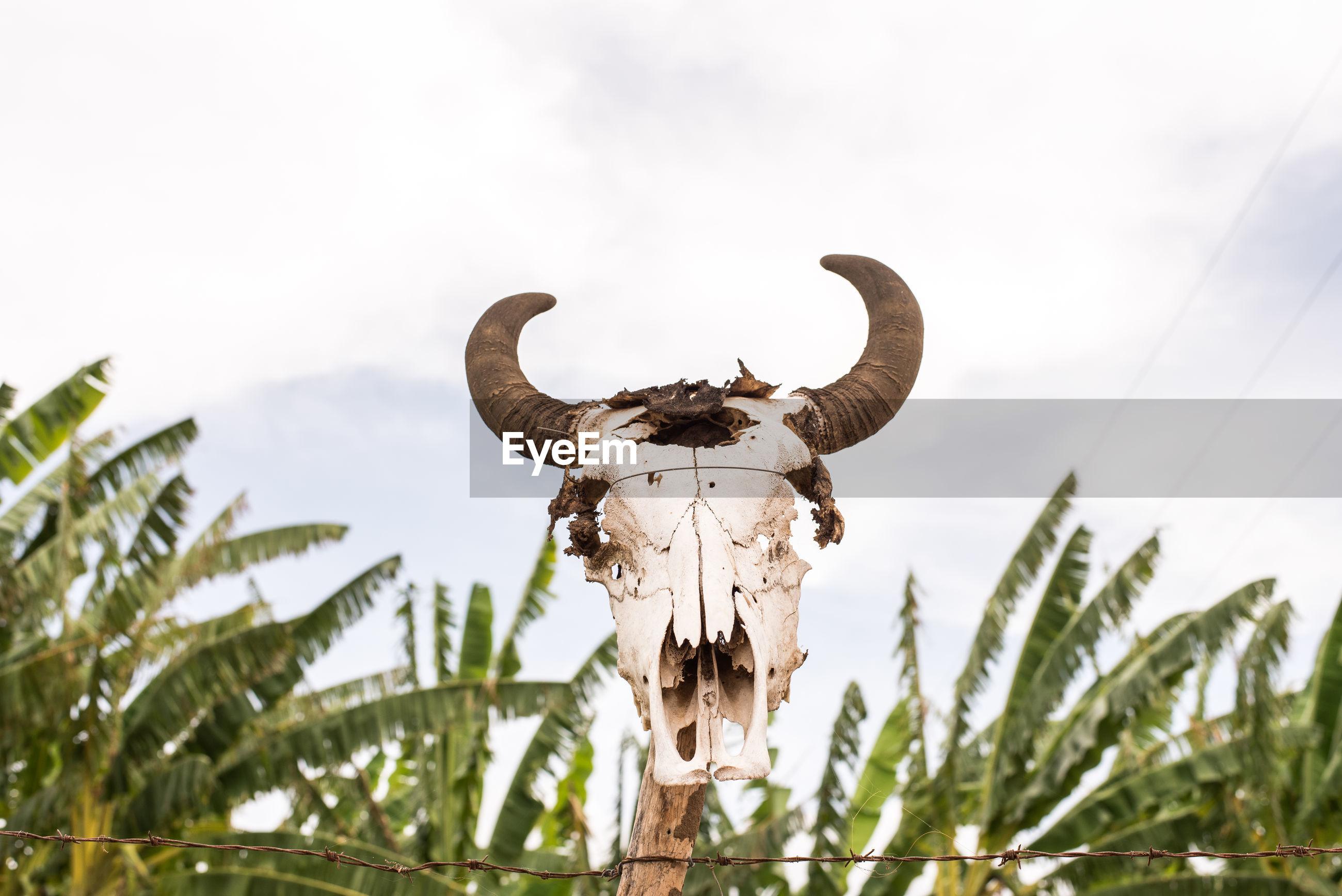 Bull skull over plants against sky