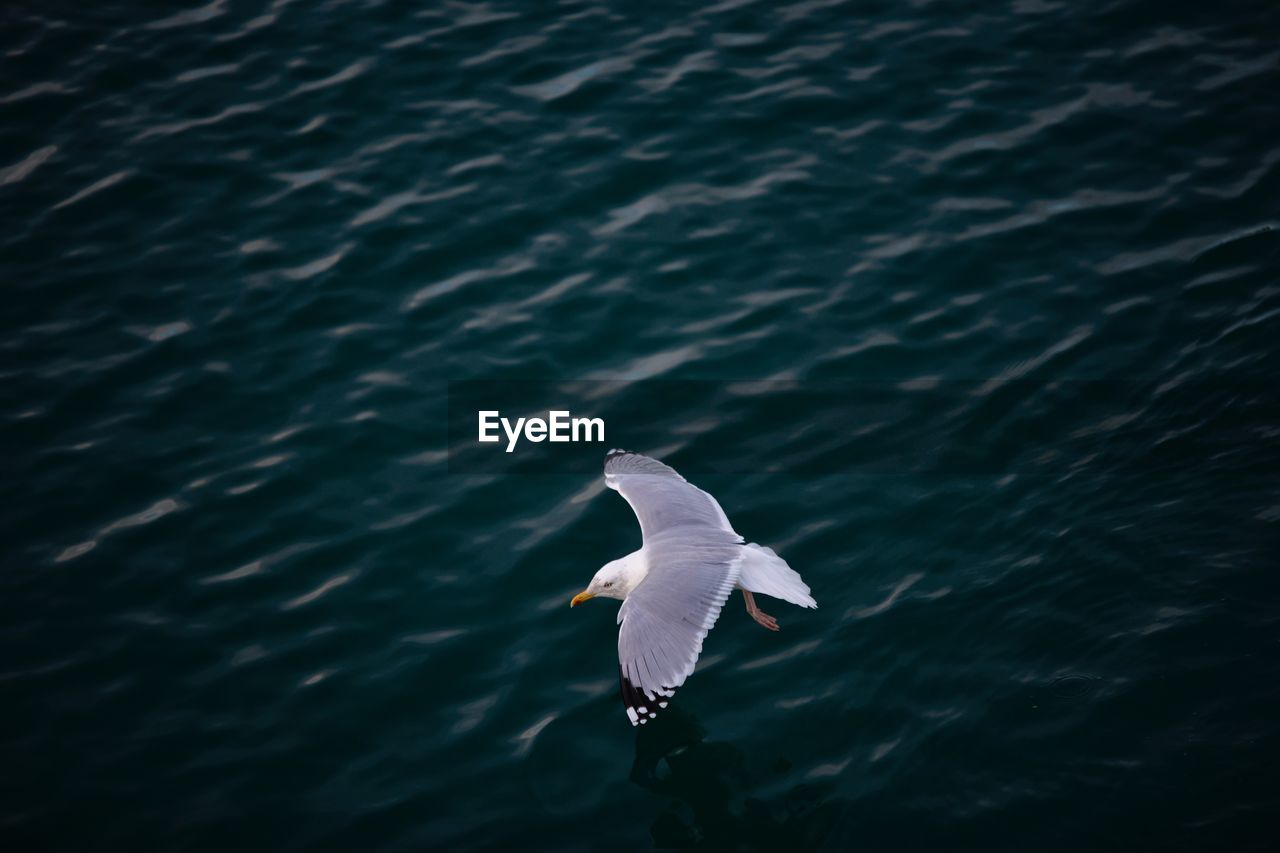 High Angle View Of Seagull Flying Over River
