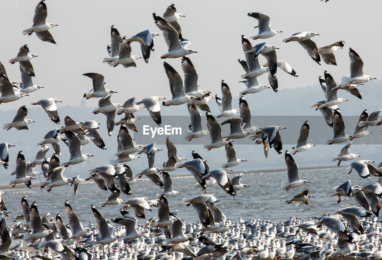 Low Angle View Of Flock Of Birds Flying Against Sky