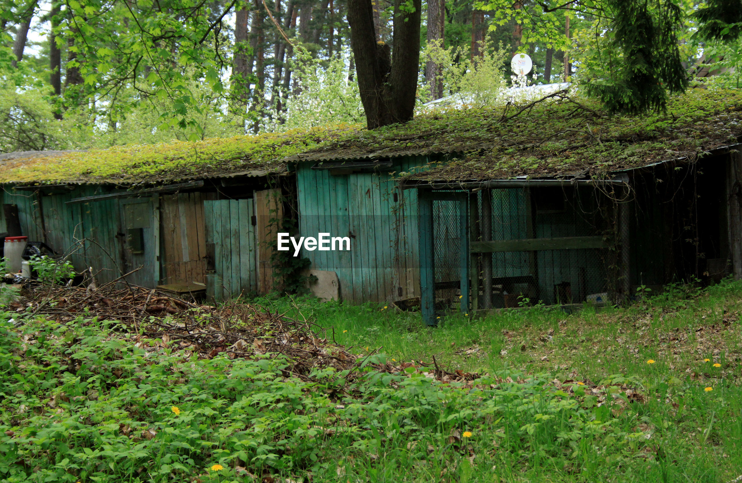 Old wooden house in forest