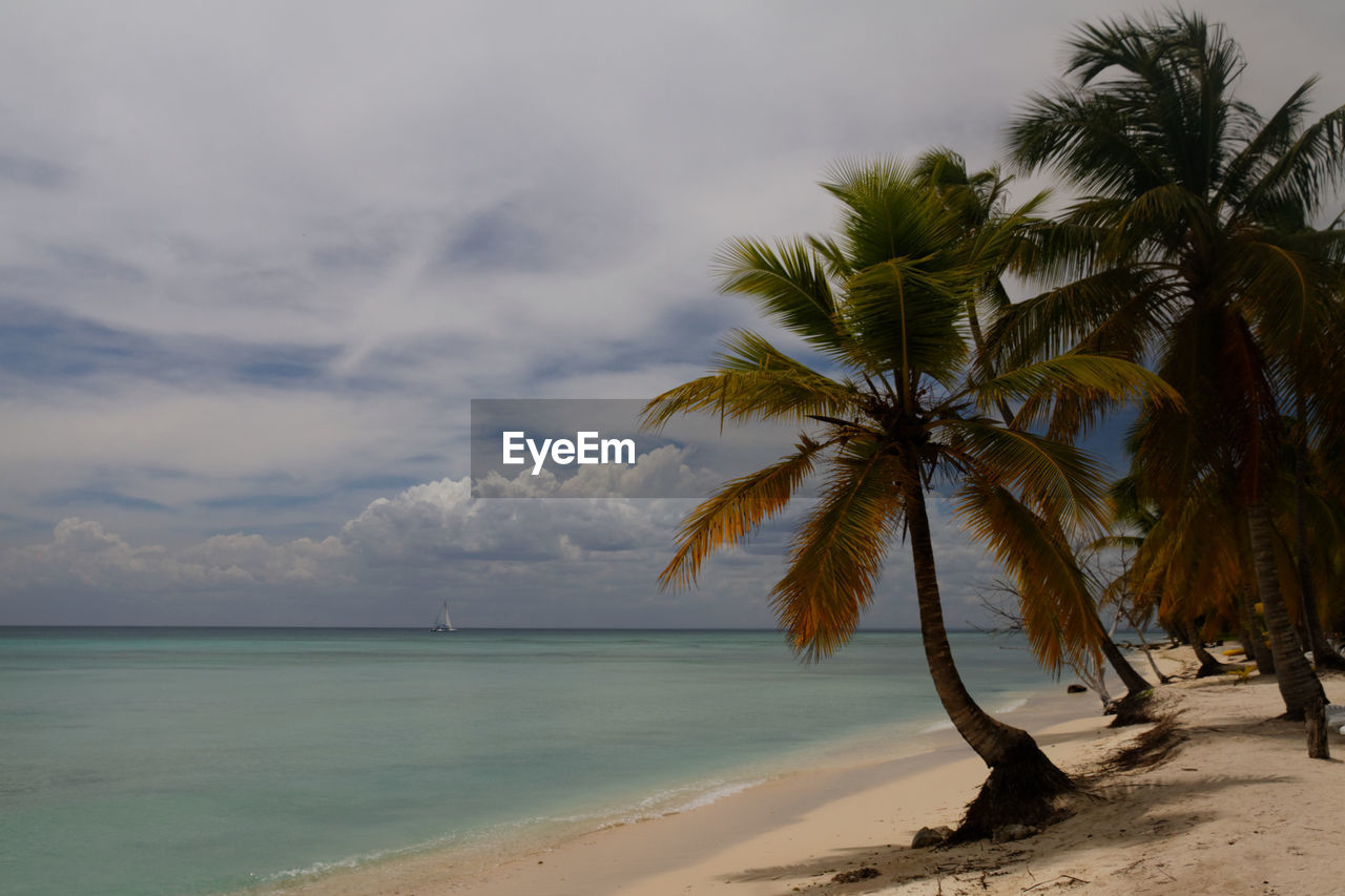 Palm Trees At Beach Against Cloudy Sky