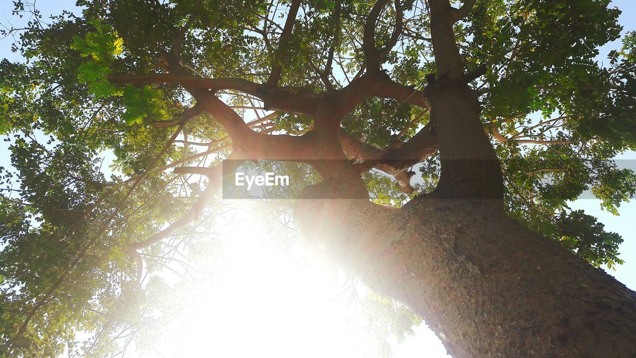 tree, low angle view, branch, nature, tree trunk, forest, growth, day, outdoors, beauty in nature, no people, tranquility, sky