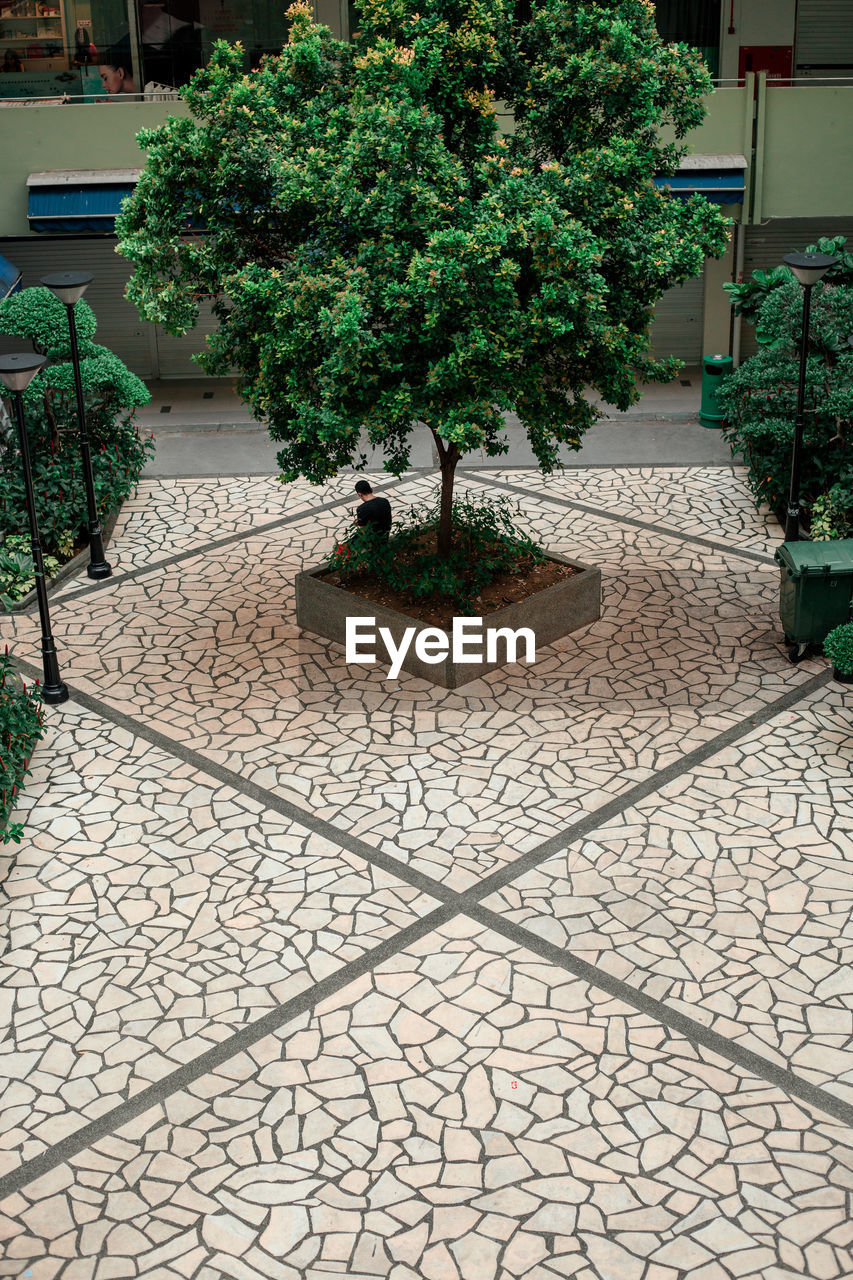 plant, growth, tree, nature, potted plant, architecture, no people, day, built structure, green color, outdoors, footpath, building exterior, cobblestone, city, street, paving stone, tiled floor, flooring, stone, courtyard, flower pot