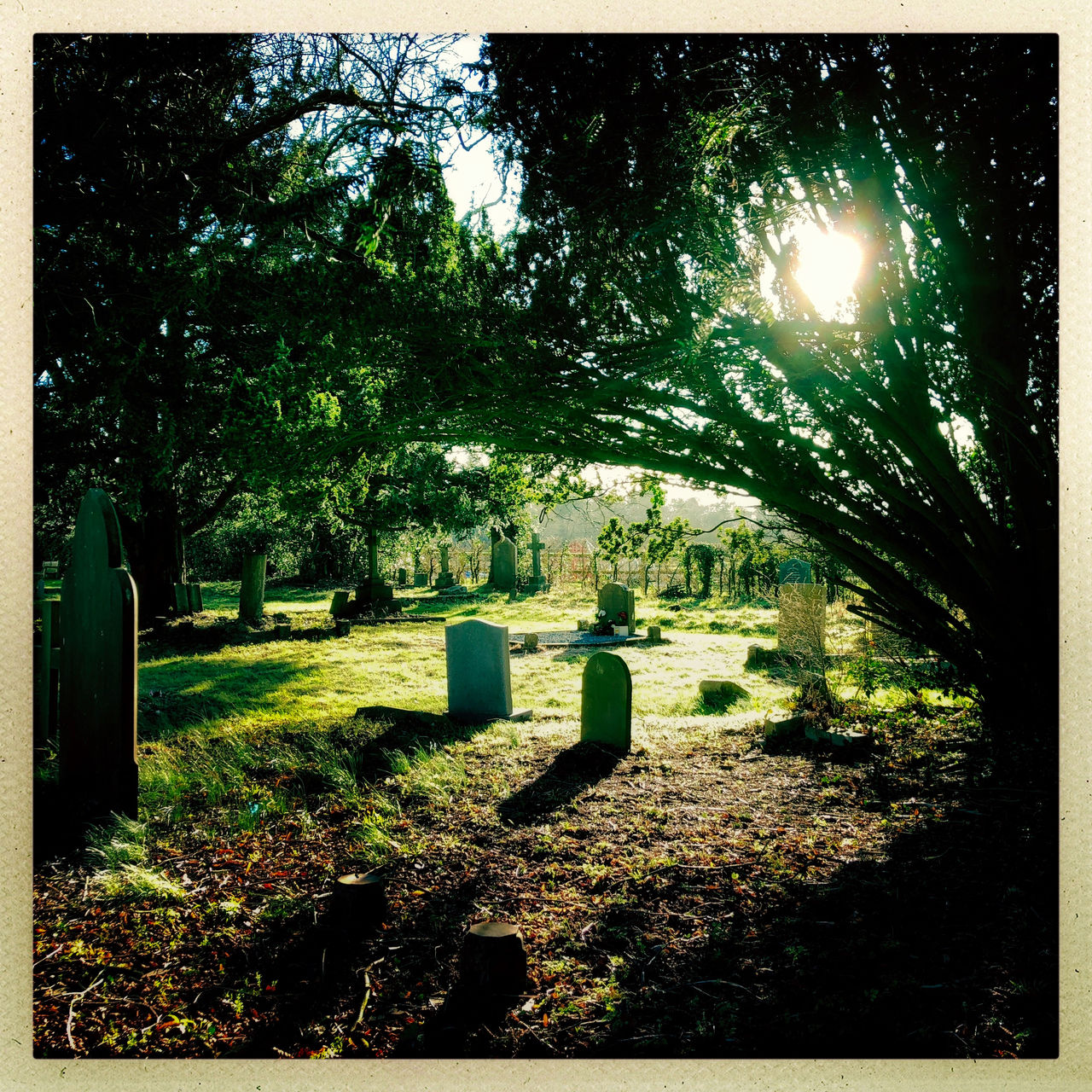 cemetery, tombstone, tree, gravestone, memorial, grave, graveyard, no people, nature, outdoors, tranquility, day, grass