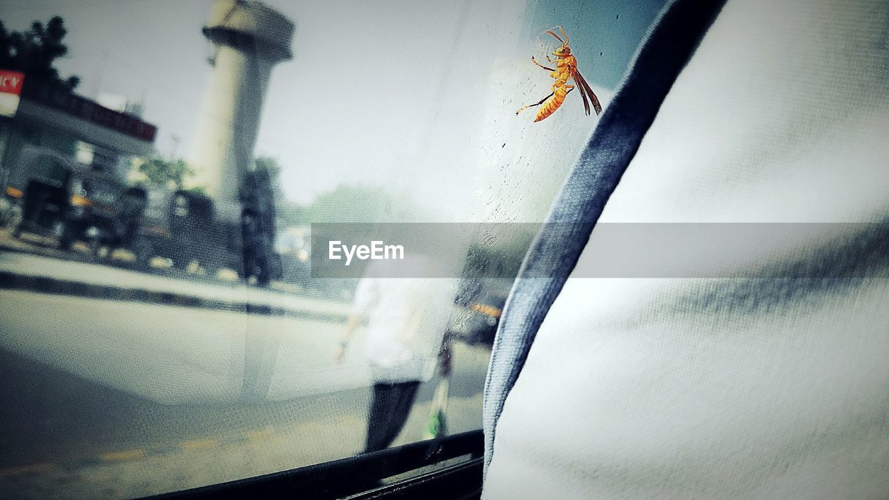 Close-up of insect on car window