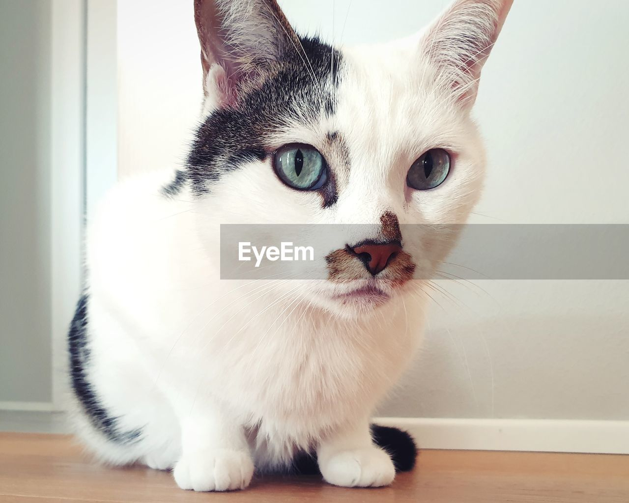 domestic, pets, cat, domestic animals, animal, animal themes, domestic cat, feline, mammal, one animal, vertebrate, indoors, portrait, whisker, looking at camera, no people, close-up, home interior, looking, day, animal head, animal eye