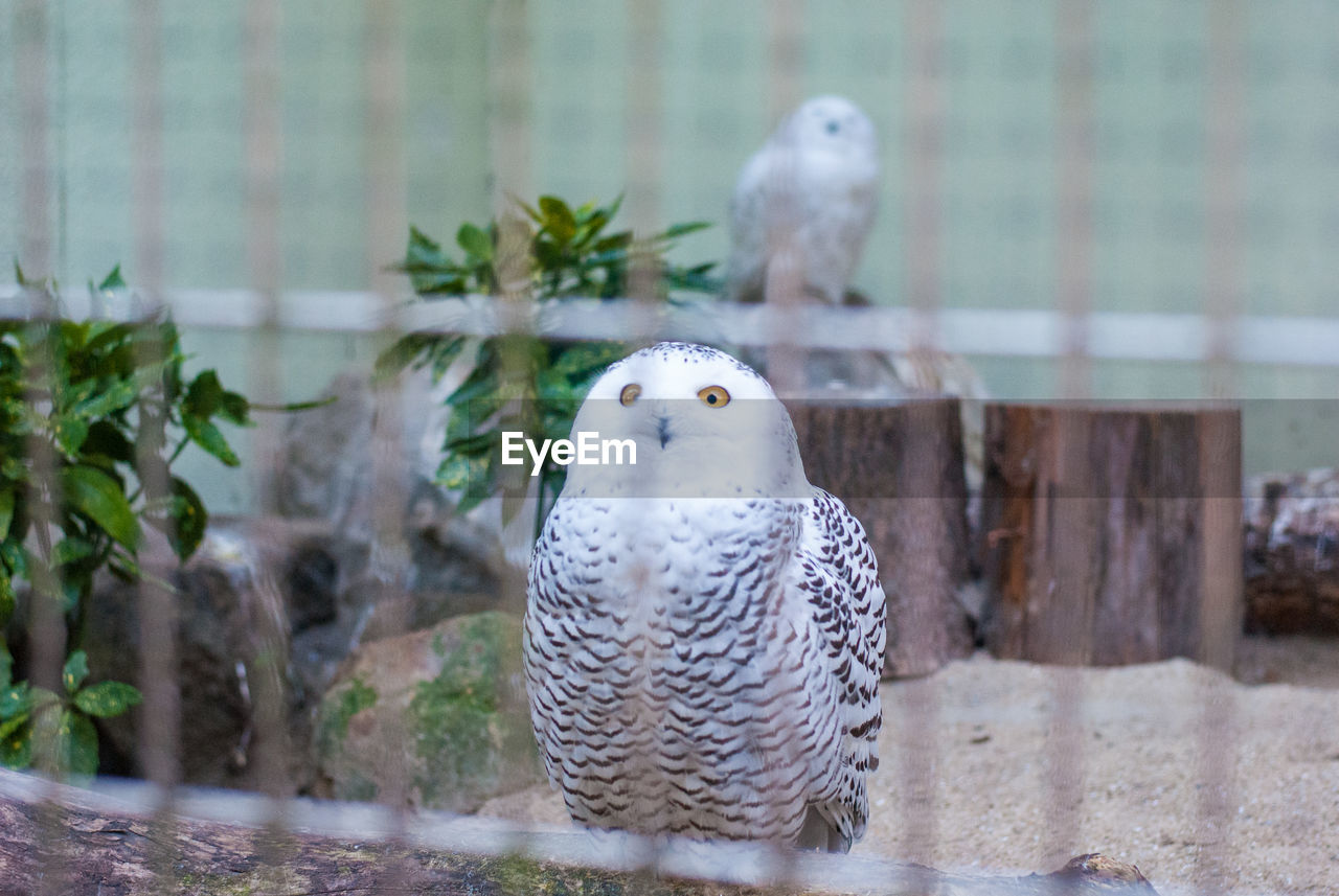 animal, animal themes, vertebrate, bird, animal wildlife, animals in the wild, one animal, focus on foreground, perching, owl, no people, bird of prey, day, nature, close-up, animals in captivity, outdoors, plant