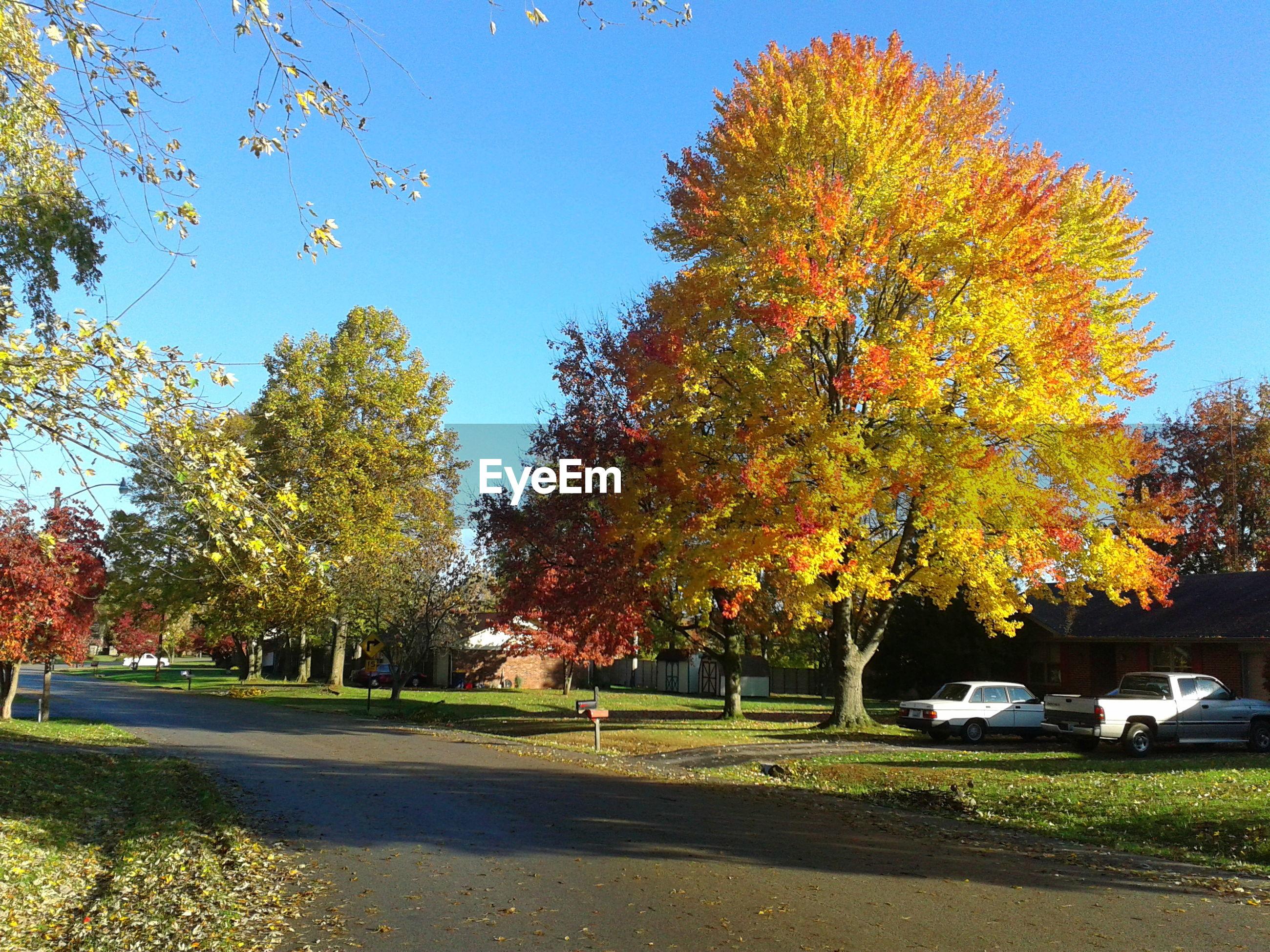 Trees at roadside against sky