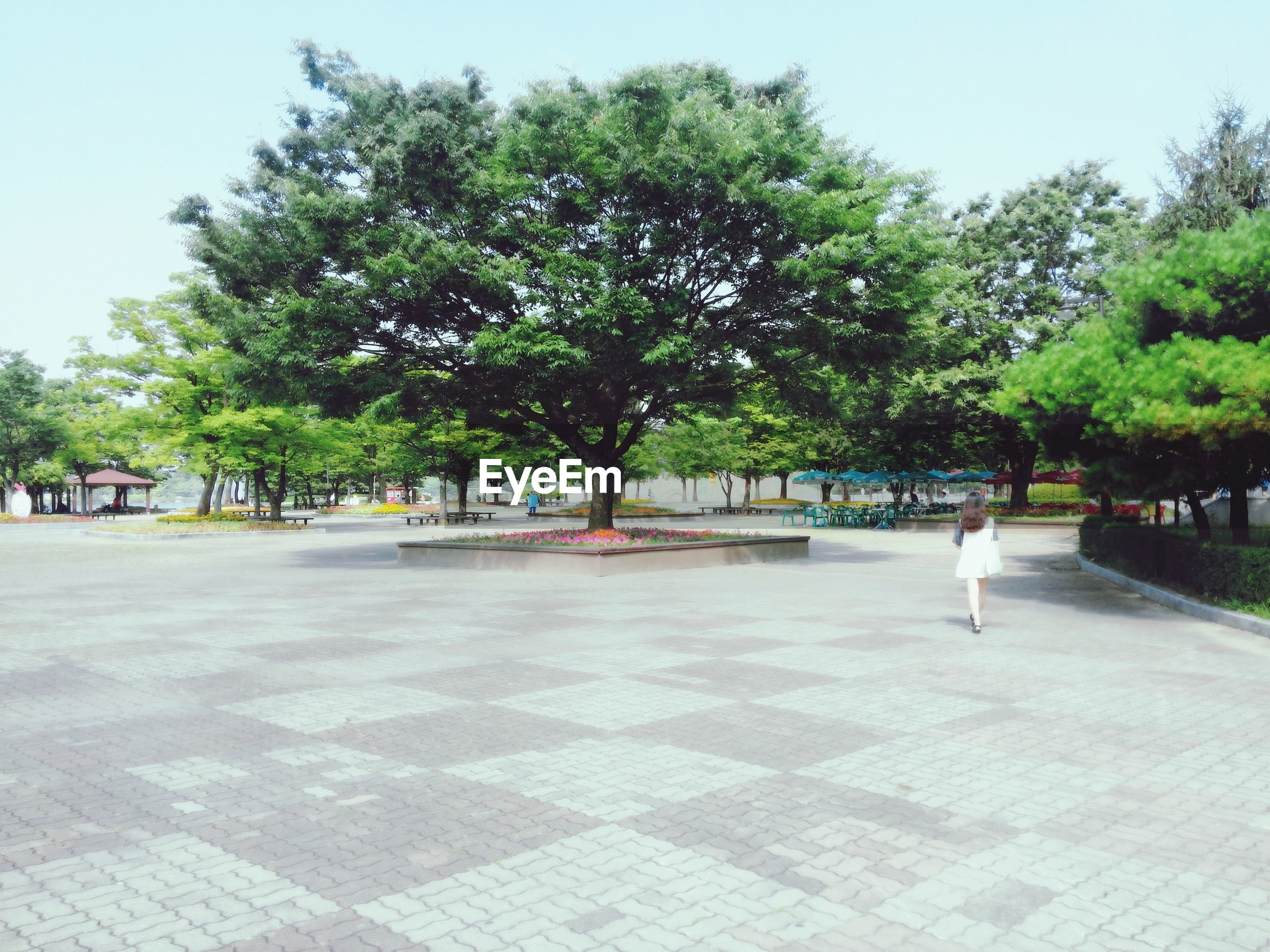 tree, park - man made space, growth, shadow, footpath, sunlight, park, incidental people, green color, clear sky, day, outdoors, nature, walkway, tranquility, person, the way forward, grass, leisure activity