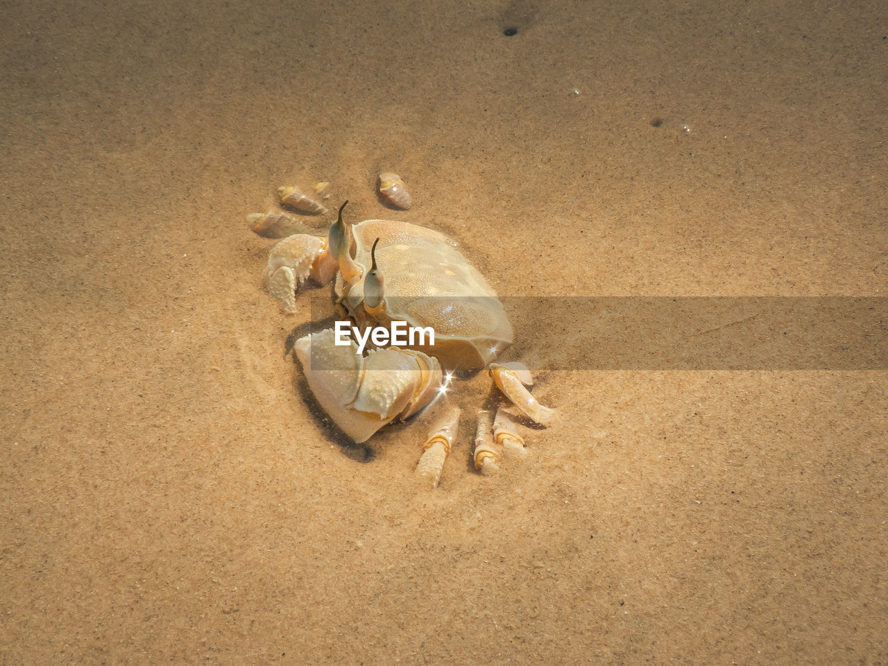 sand, animal themes, one animal, beach, nature, animals in the wild, no people, animal wildlife, sea life, day, outdoors, close-up