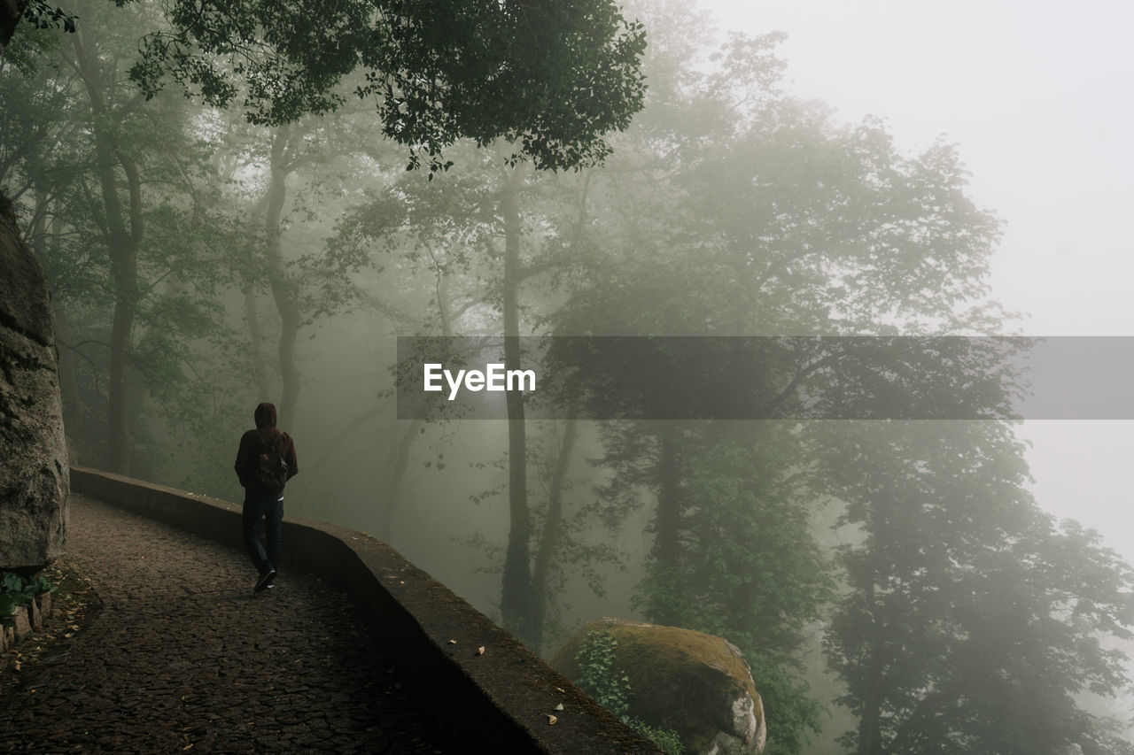 tree, plant, real people, fog, one person, full length, leisure activity, nature, lifestyles, day, growth, rear view, forest, beauty in nature, standing, tranquility, land, direction, outdoors