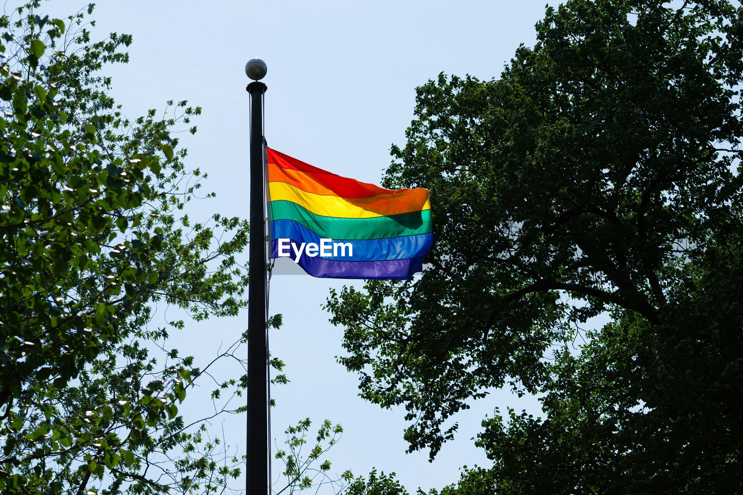Low angle view of rainbow flag against trees