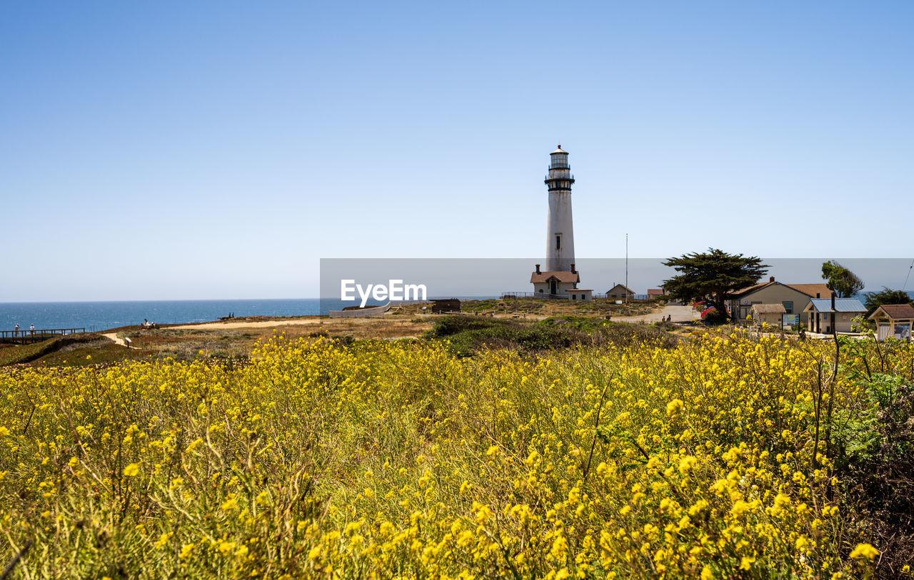 VIEW OF FLOWERING PLANTS BY SEA AGAINST SKY