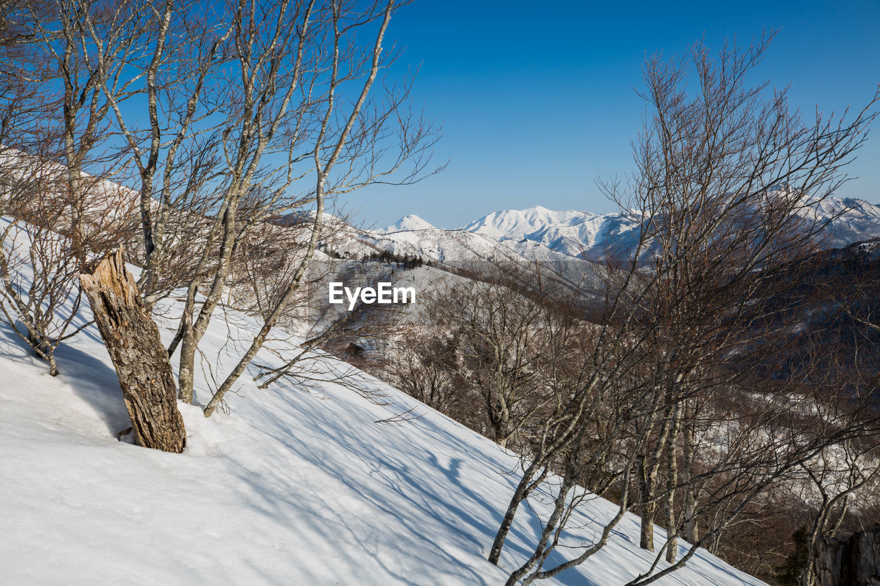 snow, cold temperature, winter, tree, plant, bare tree, sky, scenics - nature, nature, branch, beauty in nature, tranquility, mountain, no people, day, tranquil scene, white color, landscape, covering, snowcapped mountain, outdoors