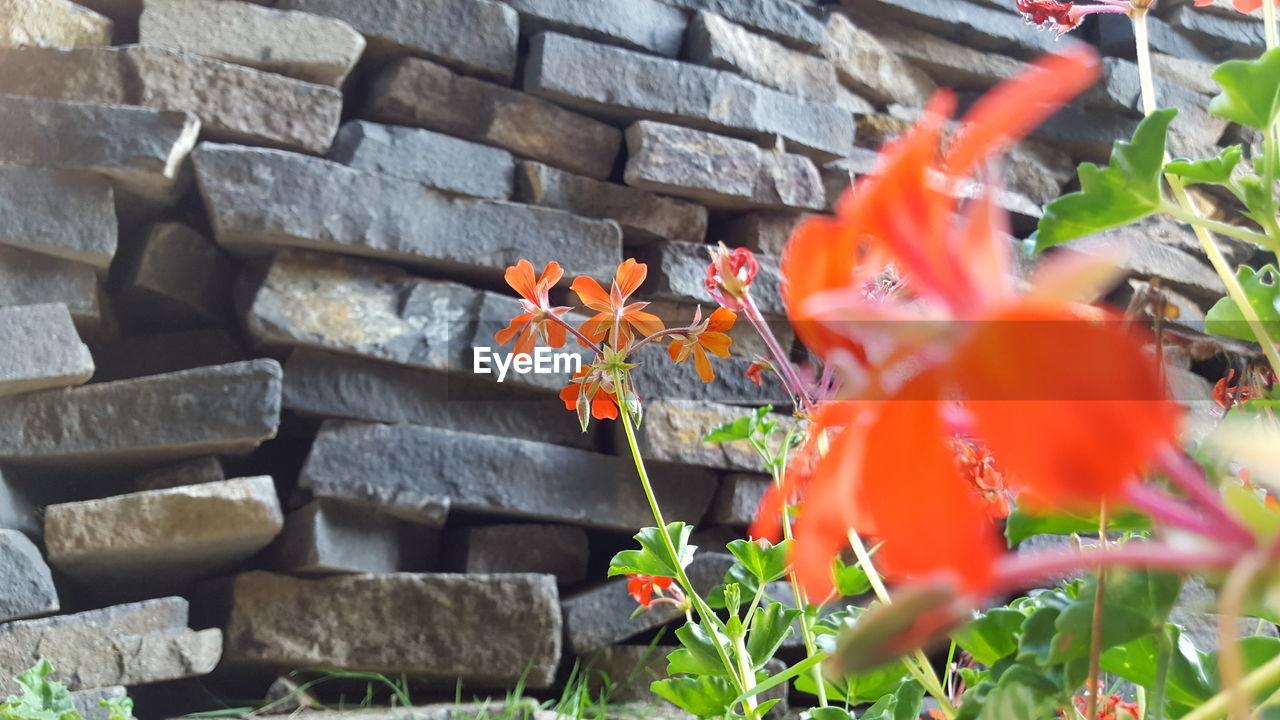 Orange Flowers Growing Against Wall