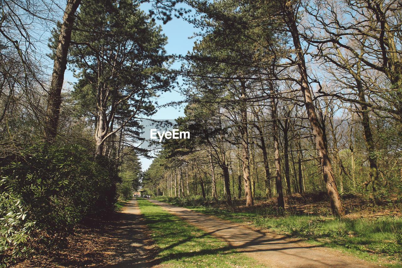 Pathway Amidst Trees