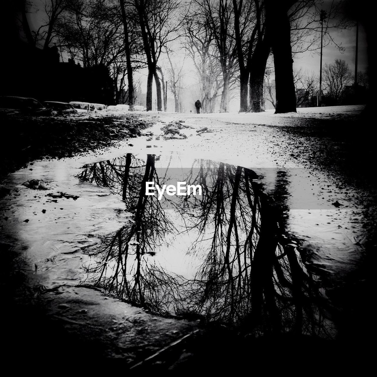Bare trees reflected in puddle