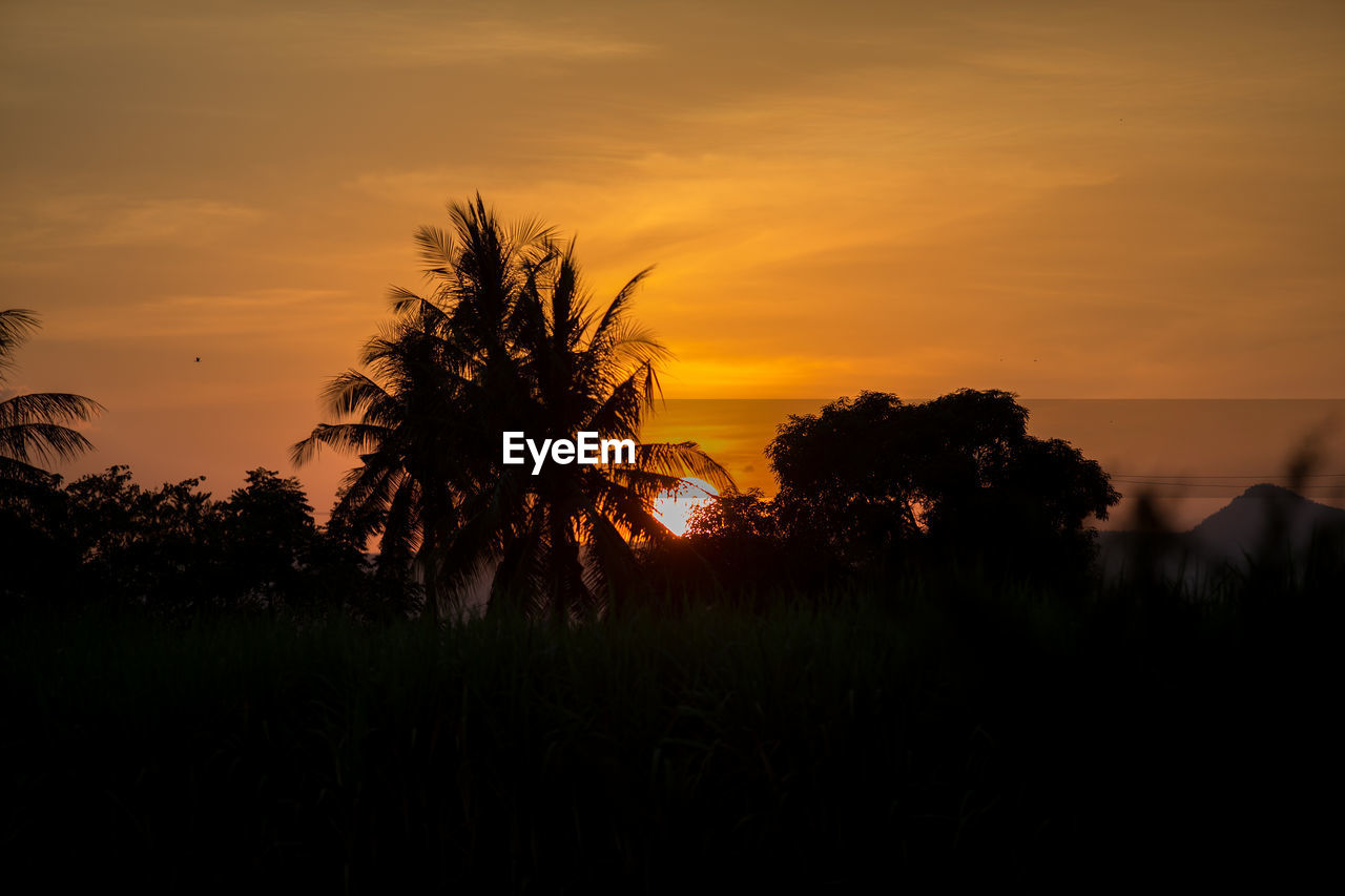 sunset, beauty in nature, sky, tranquility, silhouette, scenics - nature, plant, tranquil scene, orange color, tree, idyllic, nature, cloud - sky, growth, no people, non-urban scene, tropical climate, outdoors, palm tree, environment, coconut palm tree, romantic sky