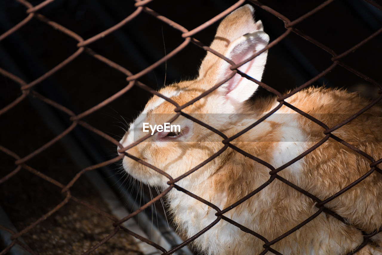 Close-Up Of Rabbit In Cage At Zoo