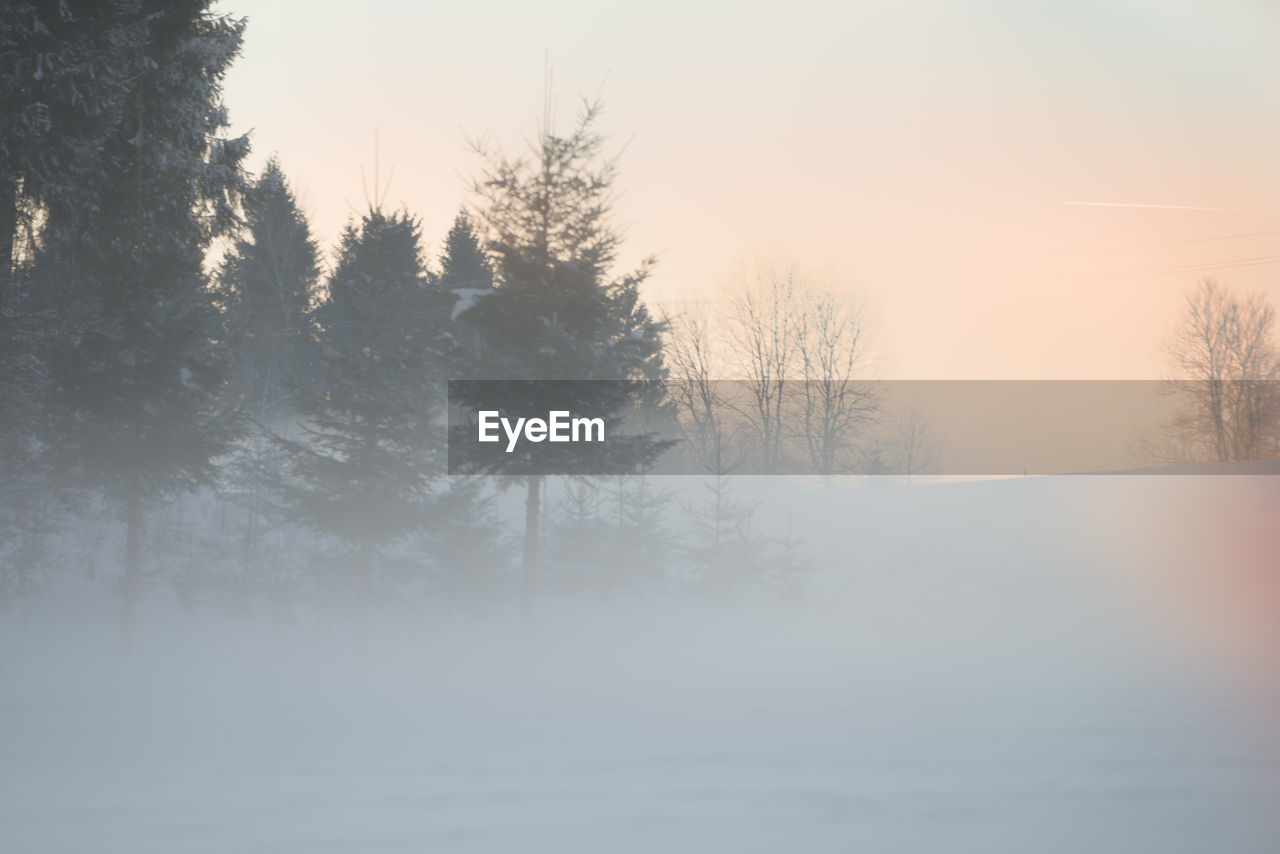 winter, cold temperature, tree, nature, snow, tranquility, beauty in nature, no people, tranquil scene, mist, scenics, fog, outdoors, landscape, bare tree, hazy, day, sky