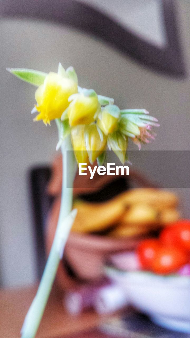 flower, petal, freshness, fragility, flower head, close-up, indoors, nature, beauty in nature, day, no people, yellow, blooming, ready-to-eat