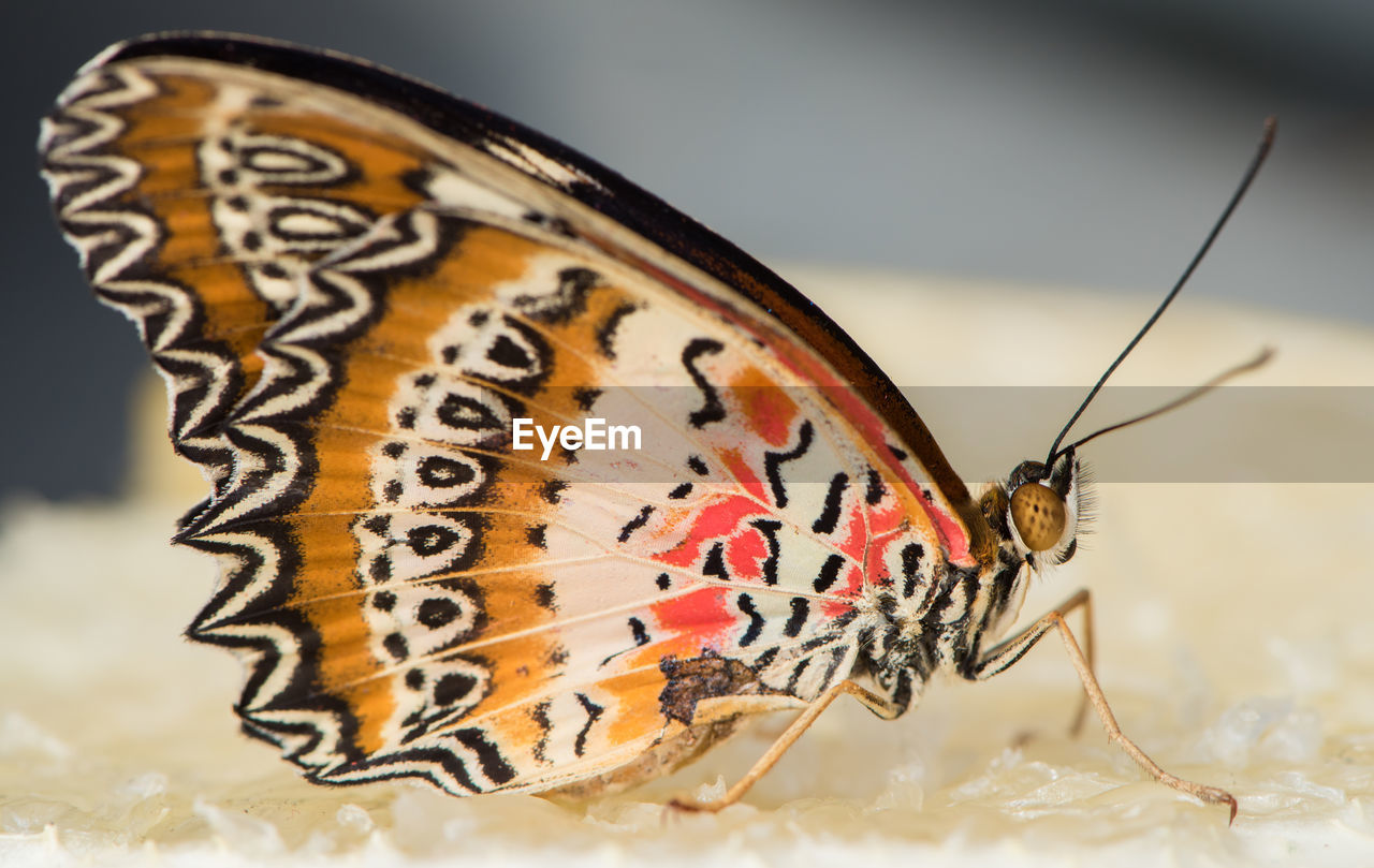 CLOSE-UP OF BUTTERFLY ON A HUMAN