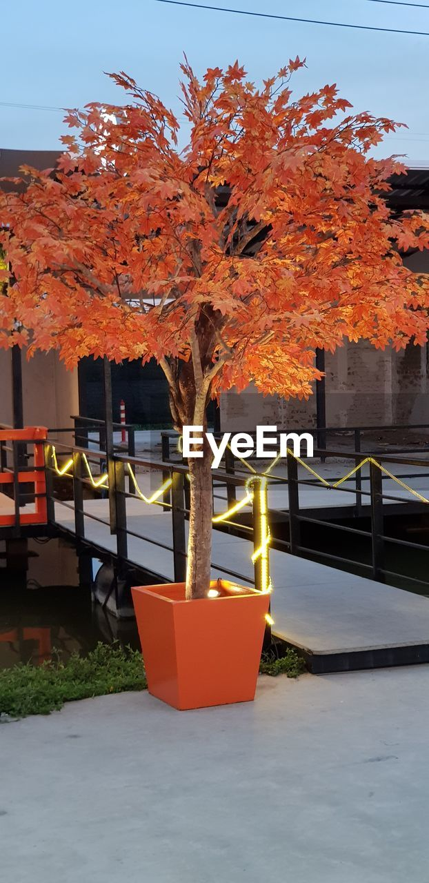 orange color, autumn, plant, tree, nature, change, no people, growth, day, architecture, outdoors, built structure, beauty in nature, leaf, plant part, red, sky, close-up, potted plant, hanging, orange