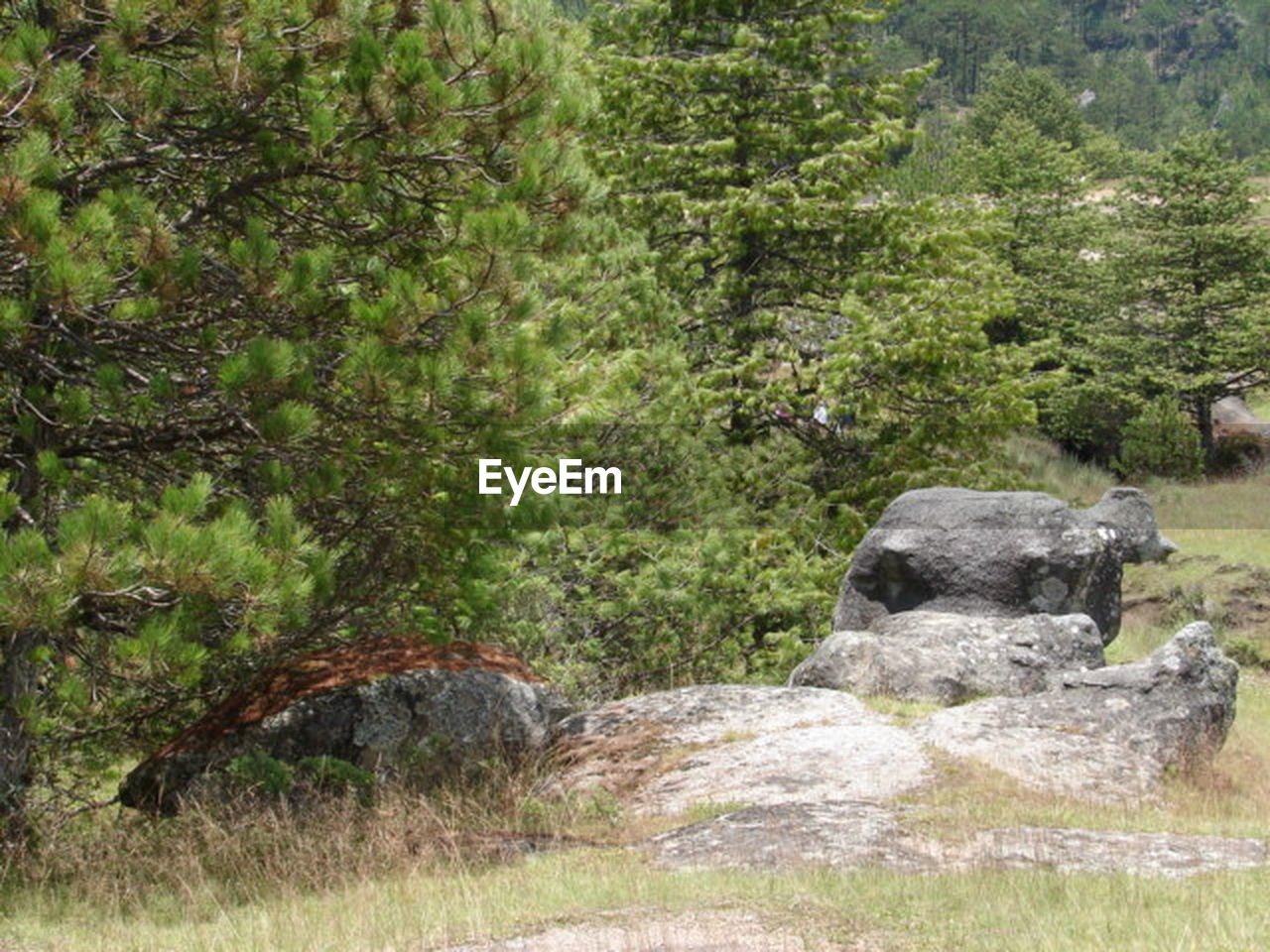 nature, tree, no people, rock - object, forest, day, landscape, growth, tranquility, outdoors, scenics, grass, beauty in nature