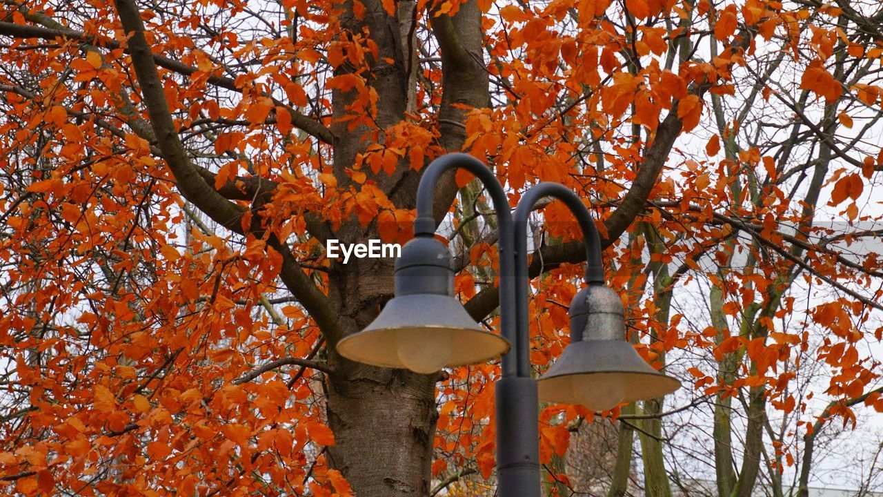 autumn, tree, orange color, change, leaf, branch, nature, outdoors, day, no people, low angle view, beauty in nature, tree trunk