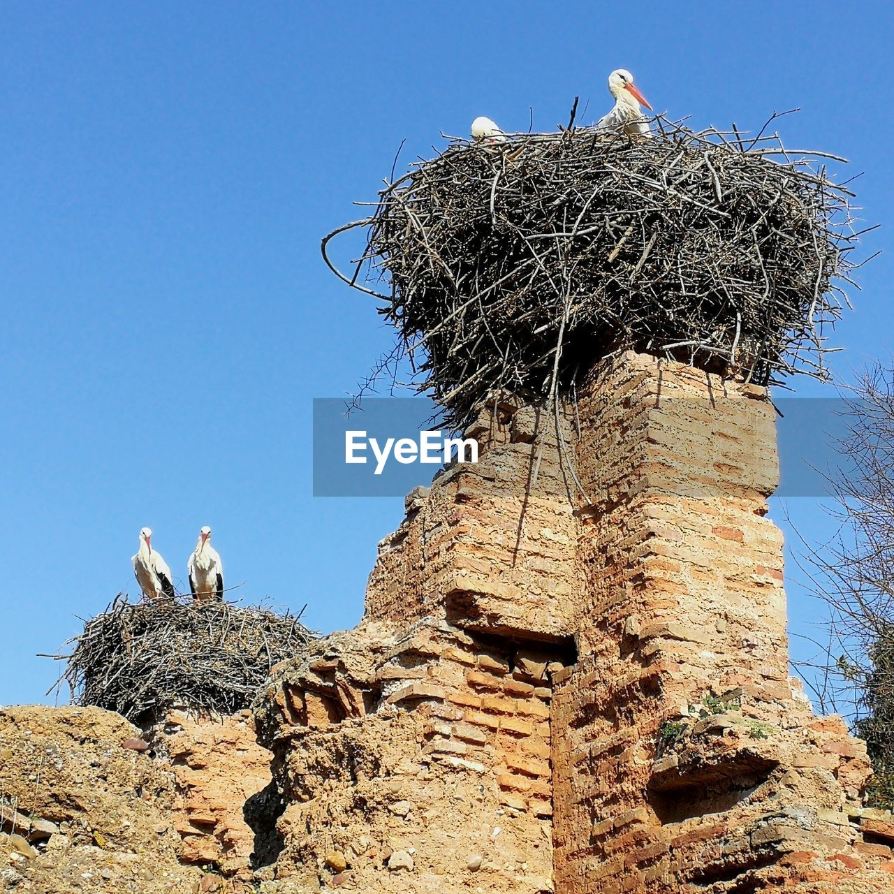 animal themes, bird, animal, animal nest, vertebrate, group of animals, animals in the wild, sky, animal wildlife, nature, day, bird nest, two animals, stork, low angle view, no people, clear sky, perching, plant, tree, outdoors, animal family