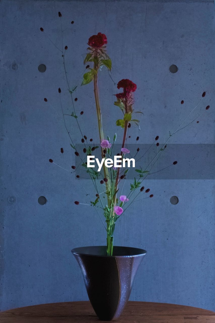 growth, flower, plant, potted plant, nature, indoors, no people, fragility, freshness, day