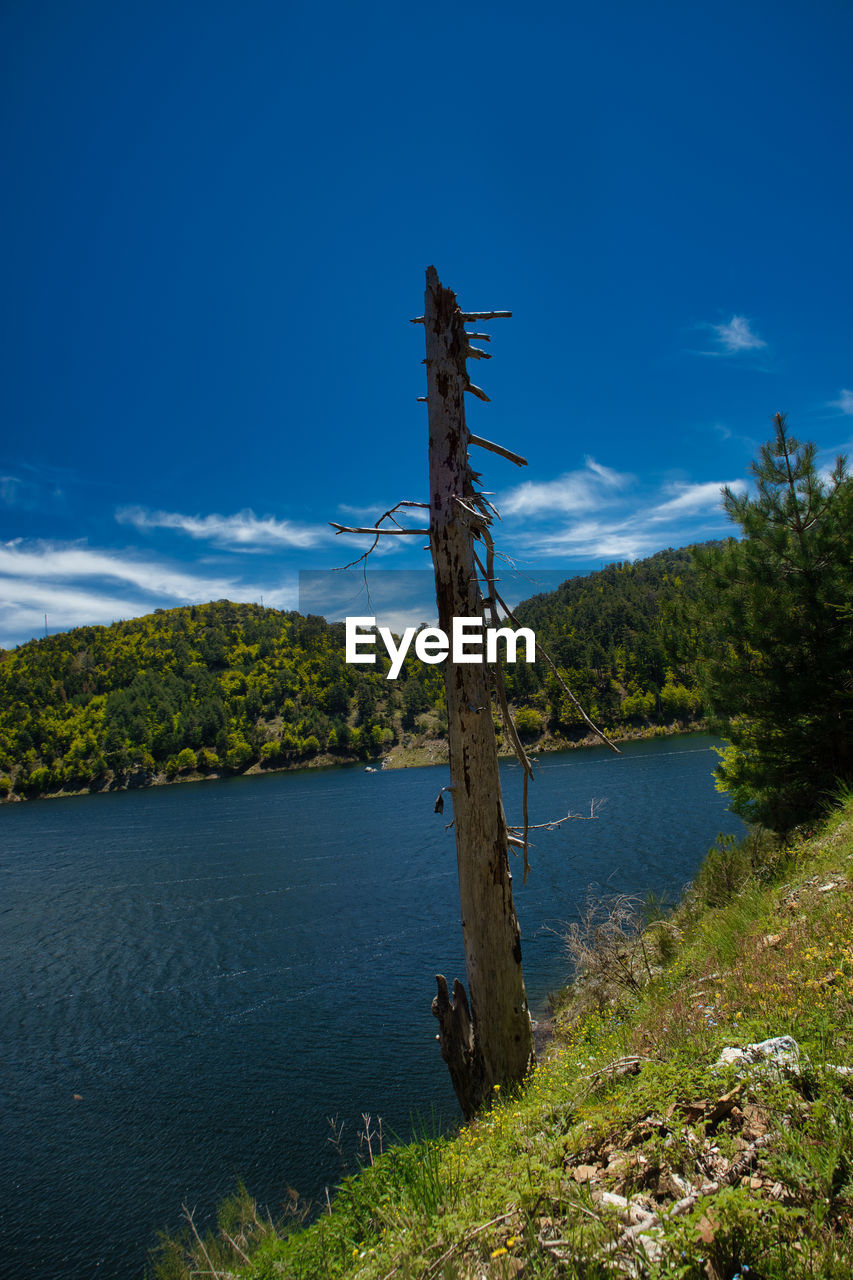 water, plant, sky, beauty in nature, tree, tranquility, tranquil scene, scenics - nature, nature, lake, non-urban scene, day, no people, blue, growth, outdoors, wood - material, land, idyllic, wooden post