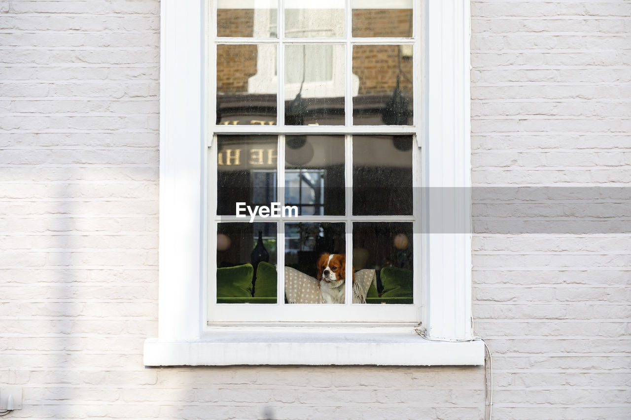 window, built structure, glass - material, architecture, transparent, building exterior, day, no people, building, animal, outdoors, wall - building feature, animal themes, mammal, reflection, white color, vertebrate, wall, pets, group of animals, window frame