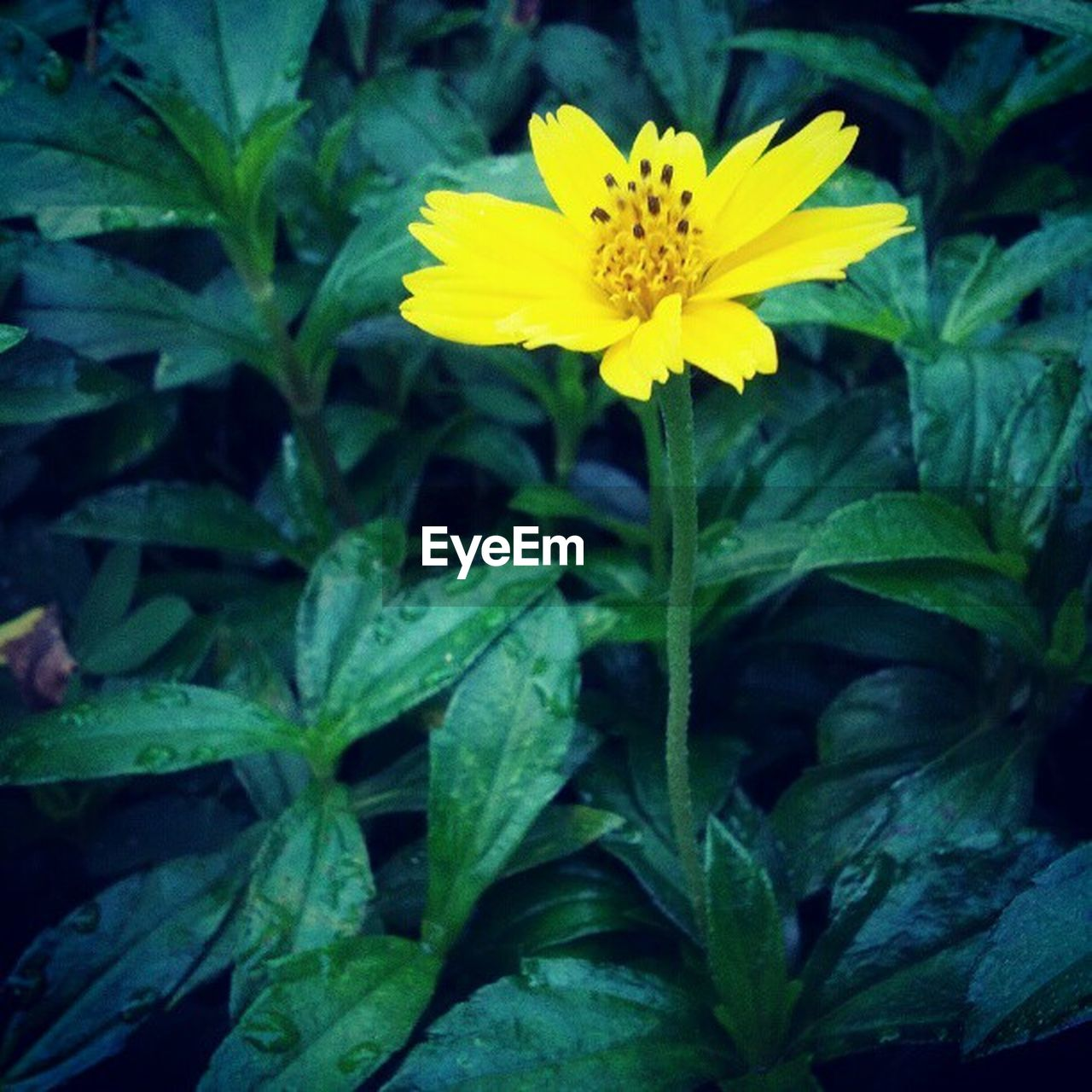 flower, yellow, fragility, petal, growth, leaf, nature, freshness, flower head, plant, beauty in nature, green color, blooming, outdoors, close-up, no people, day