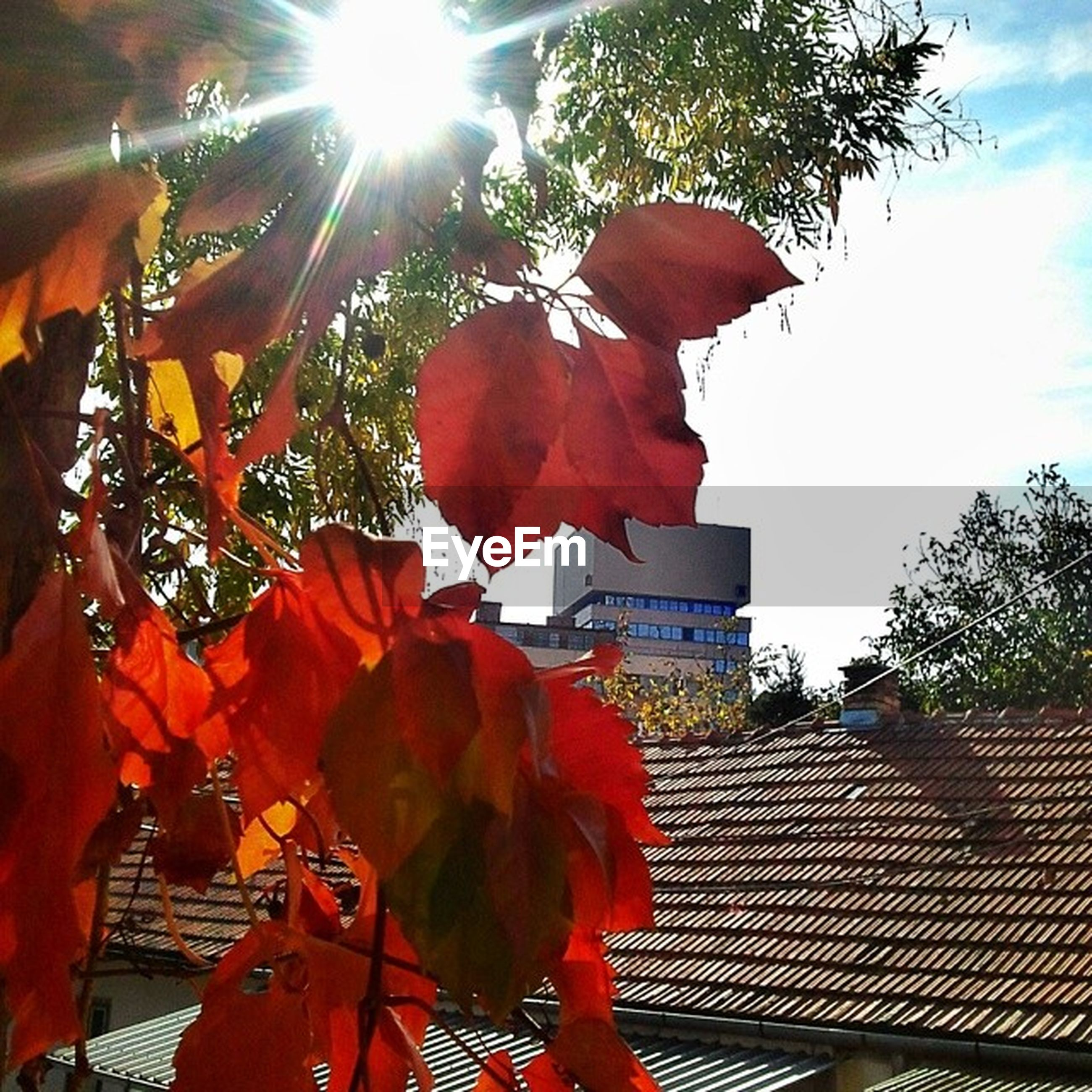 low angle view, red, sunlight, tree, sunbeam, sun, lens flare, growth, sky, sunny, leaf, day, built structure, nature, outdoors, no people, building exterior, orange color, architecture, close-up
