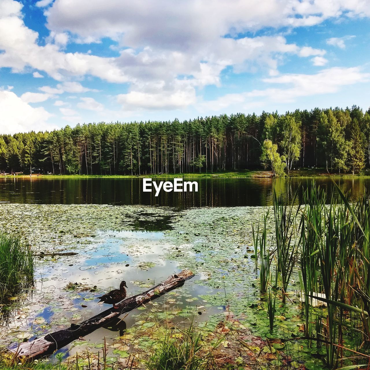 SCENIC VIEW OF LAKE AGAINST SKY IN FOREST
