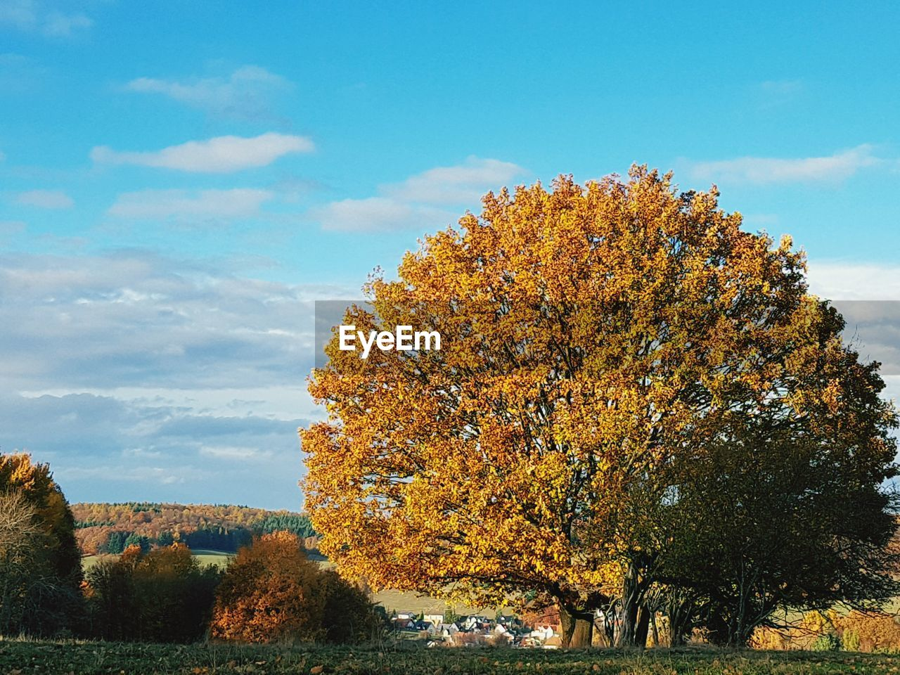 tree, plant, sky, beauty in nature, autumn, cloud - sky, nature, change, day, tranquility, water, growth, tranquil scene, scenics - nature, no people, architecture, outdoors, river, built structure, fall
