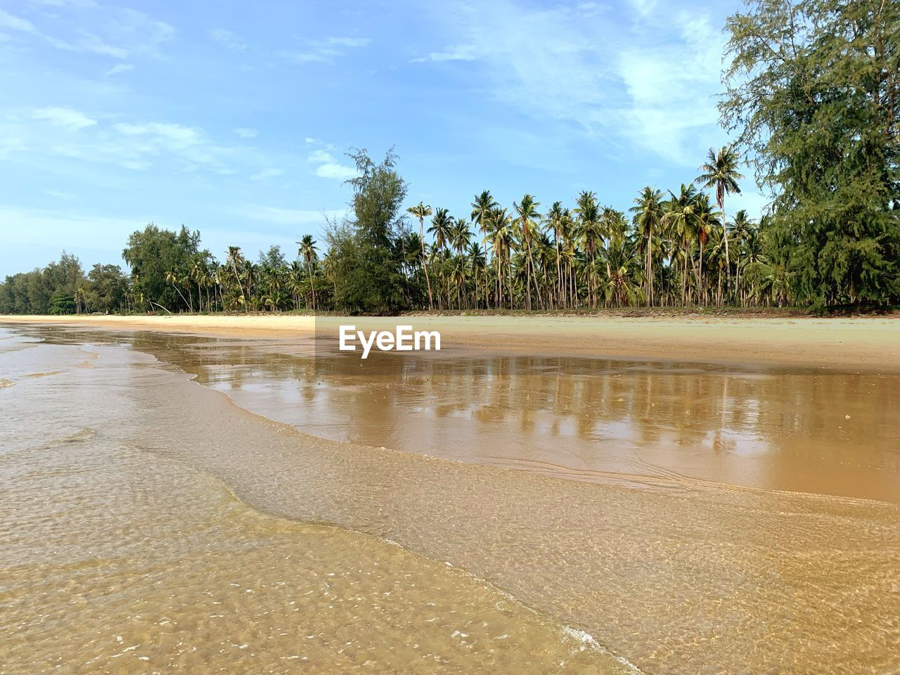 tree, sky, plant, water, tranquility, beauty in nature, tranquil scene, cloud - sky, scenics - nature, land, nature, sand, day, growth, no people, beach, non-urban scene, sunlight, idyllic, outdoors, shallow