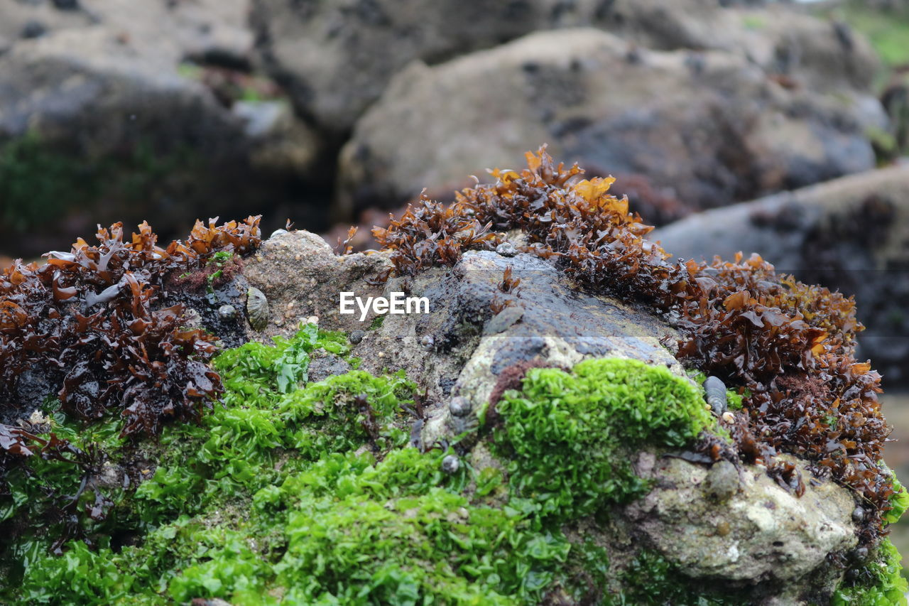 lichen, nature, rock - object, no people, outdoors, day, moss, green color, rough, growth, beauty in nature, close-up, fungus