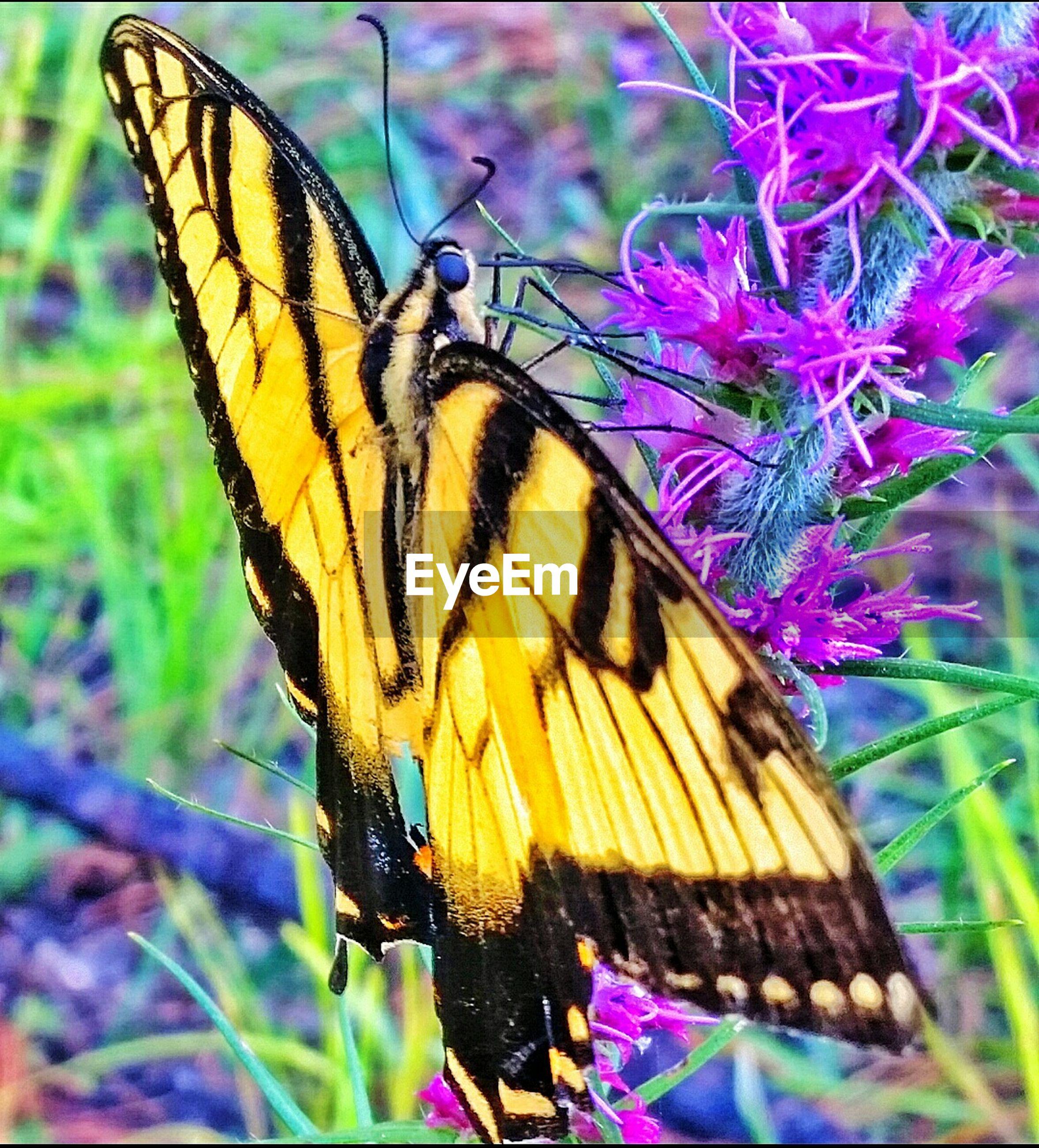 Macro shot of butterfly perching on fresh purple flowers