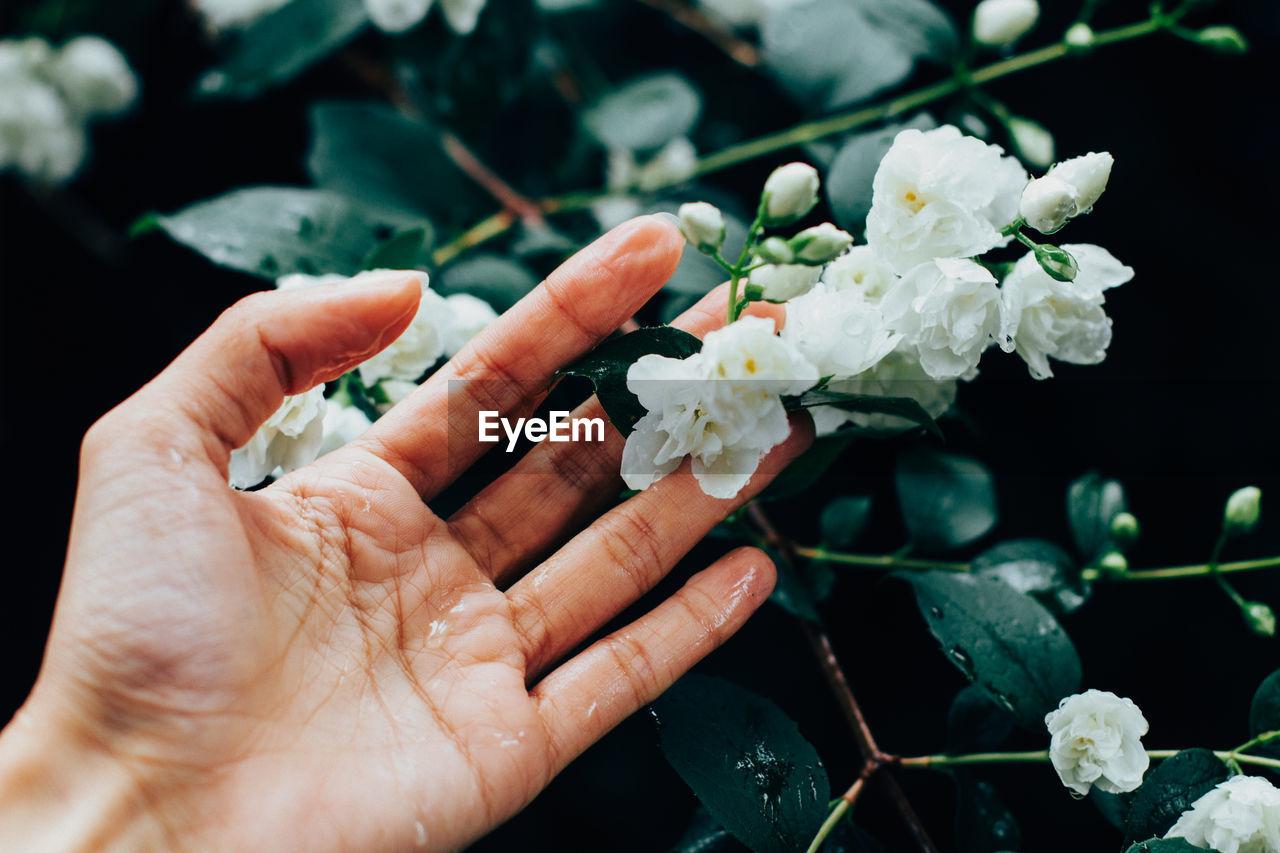 Woman Hand Touching Jasmine Flowers During Rainy Day