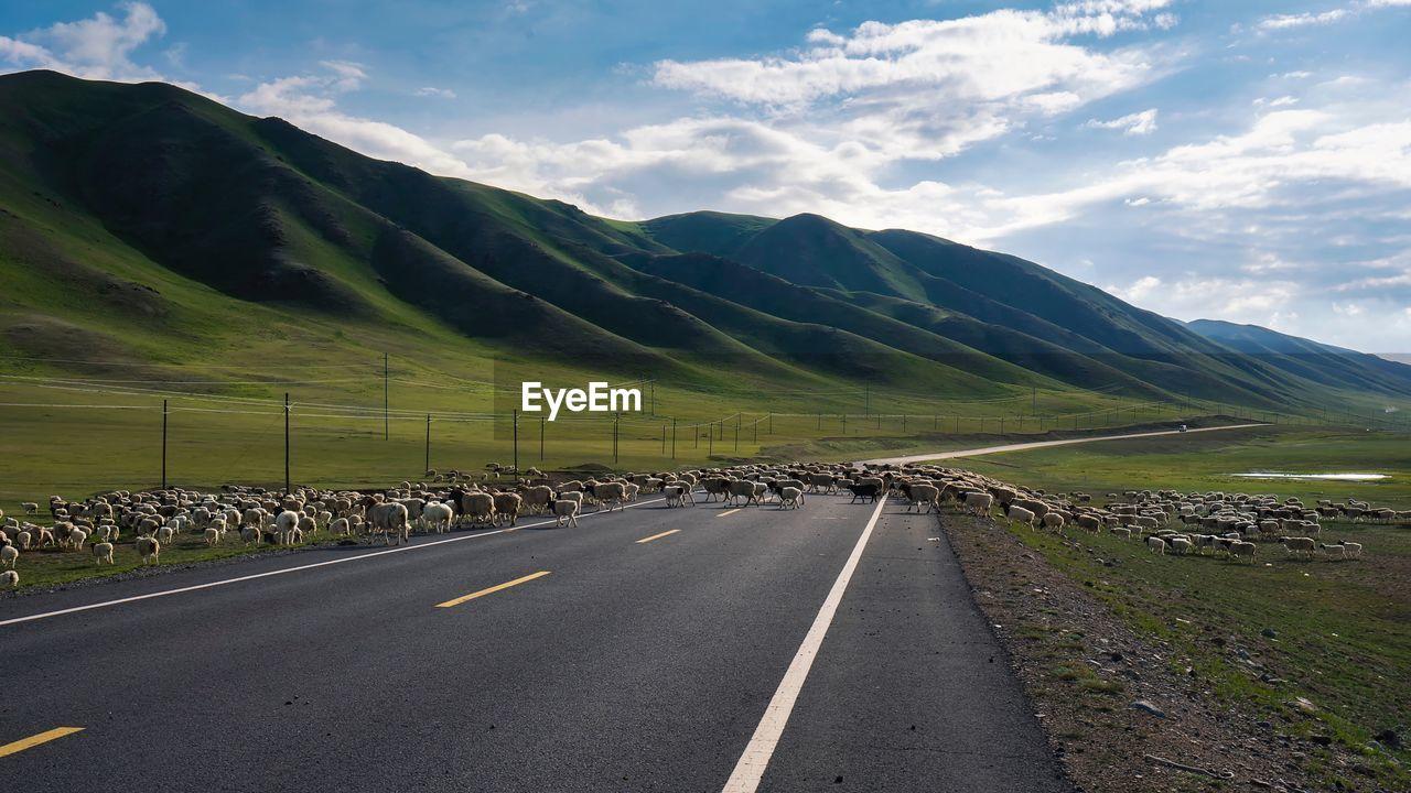 Flock Of Sheep Walking On Road Against Sky